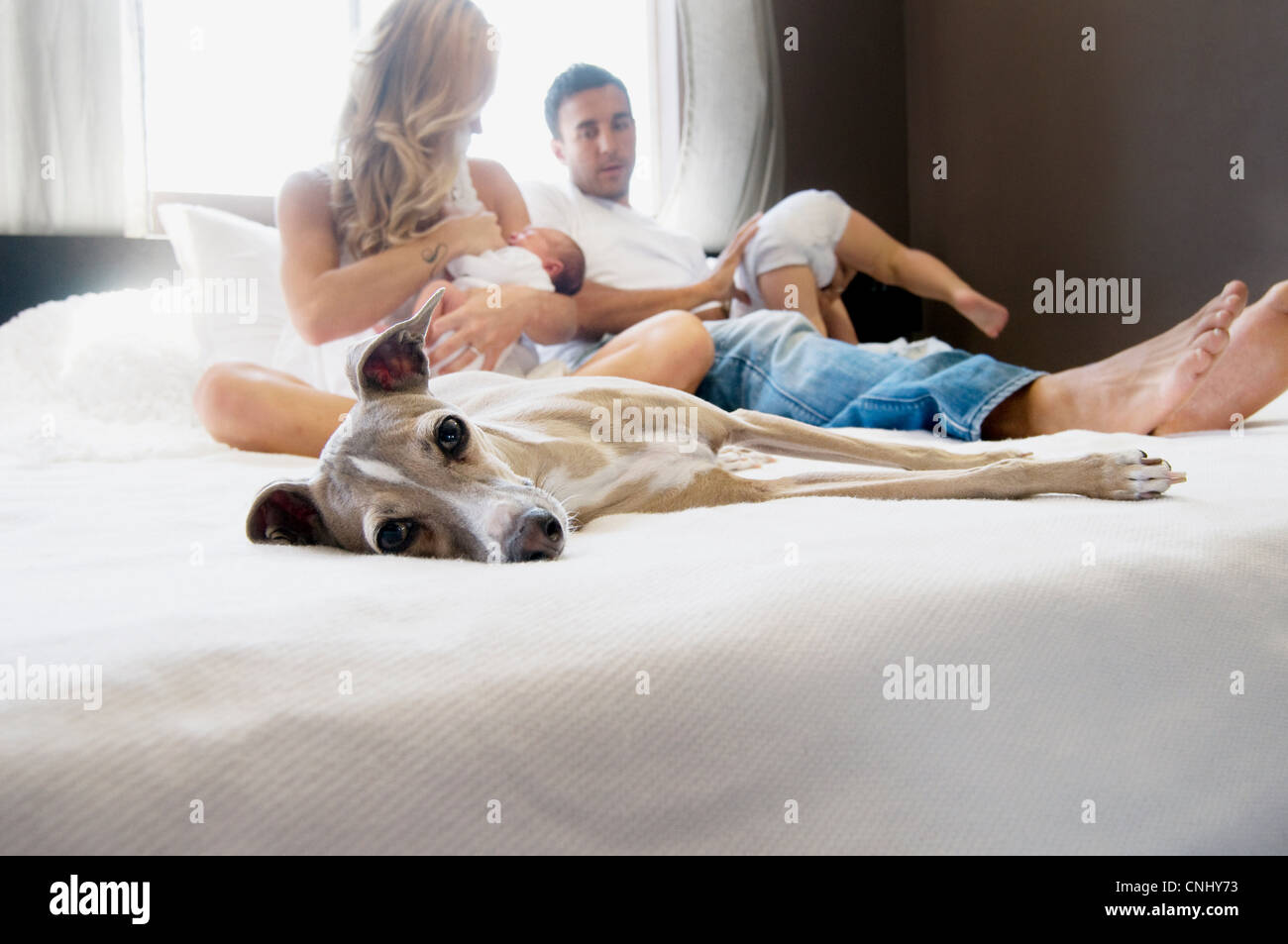 Pet dog and family with couple with babies on bed - Stock Image
