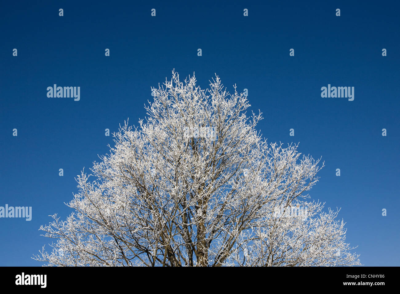 Tree covered in hoar frost Stock Photo
