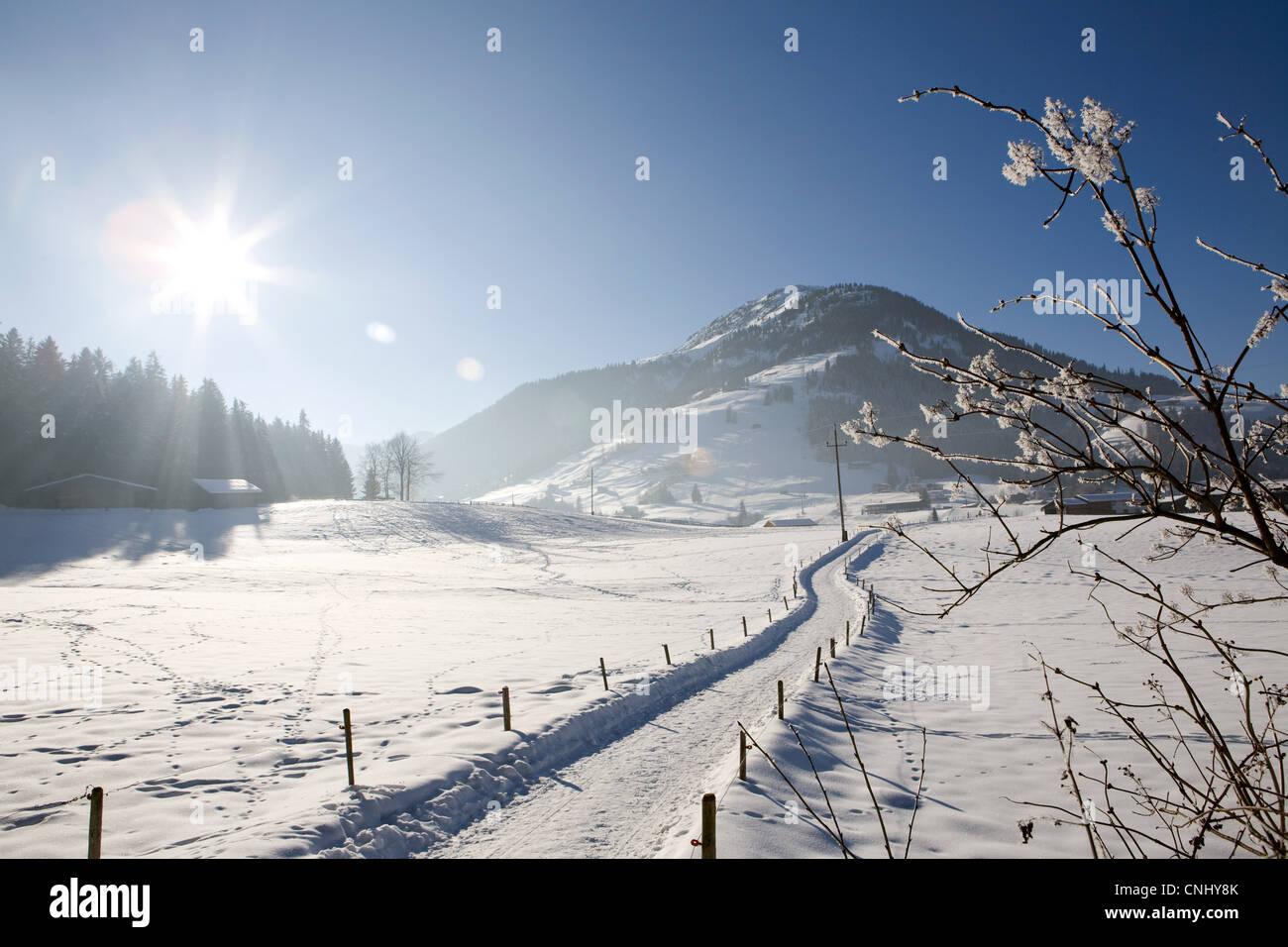 Snow covered landscape, Kirchberg, Tirol, Austria - Stock Image