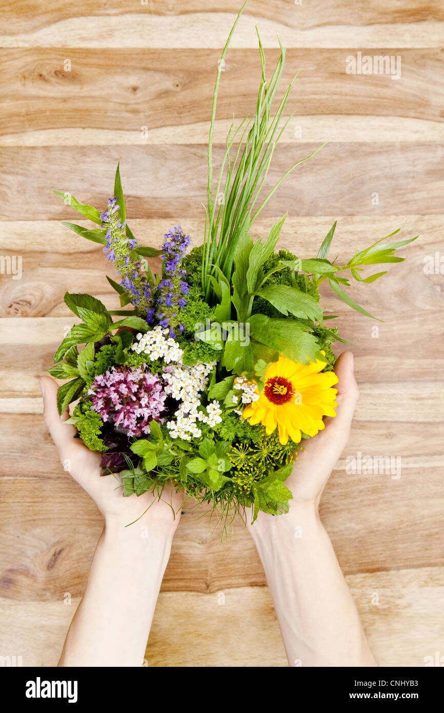 Person holding edible flowers and herbs - Stock Image