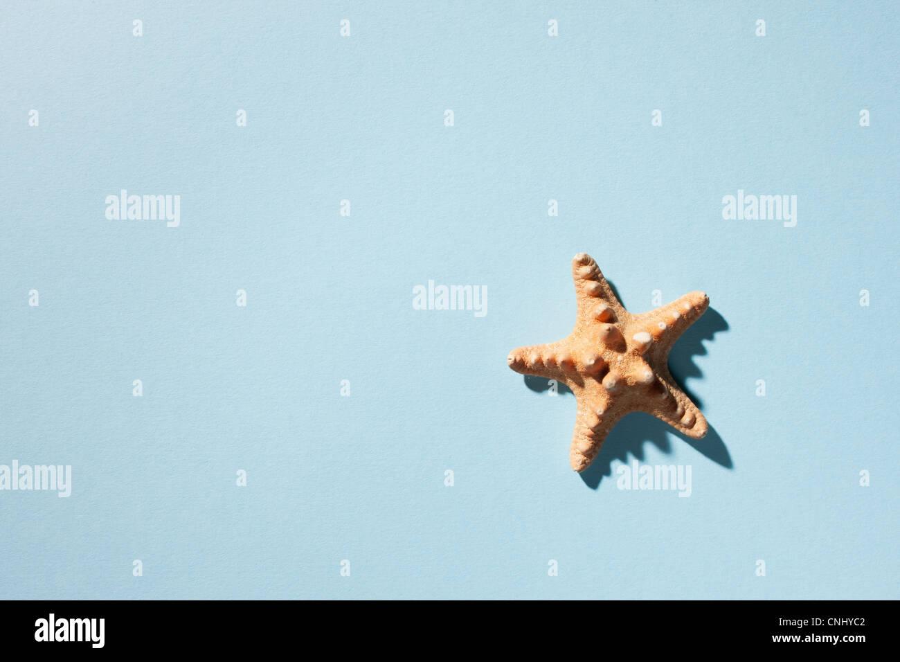 Starfish on turquoise background - Stock Image