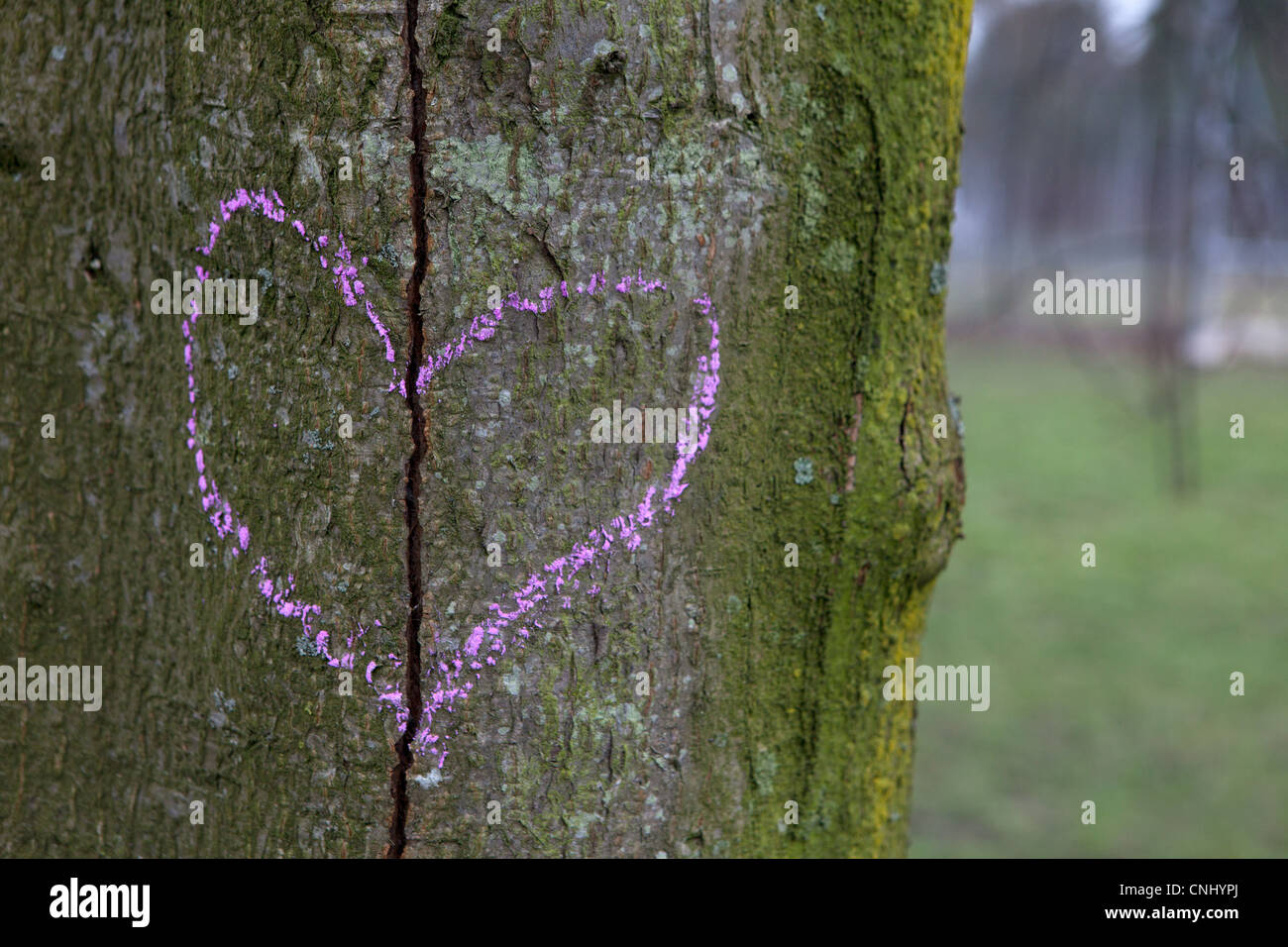 Broken heart drawn on a tree trunk - Stock Image