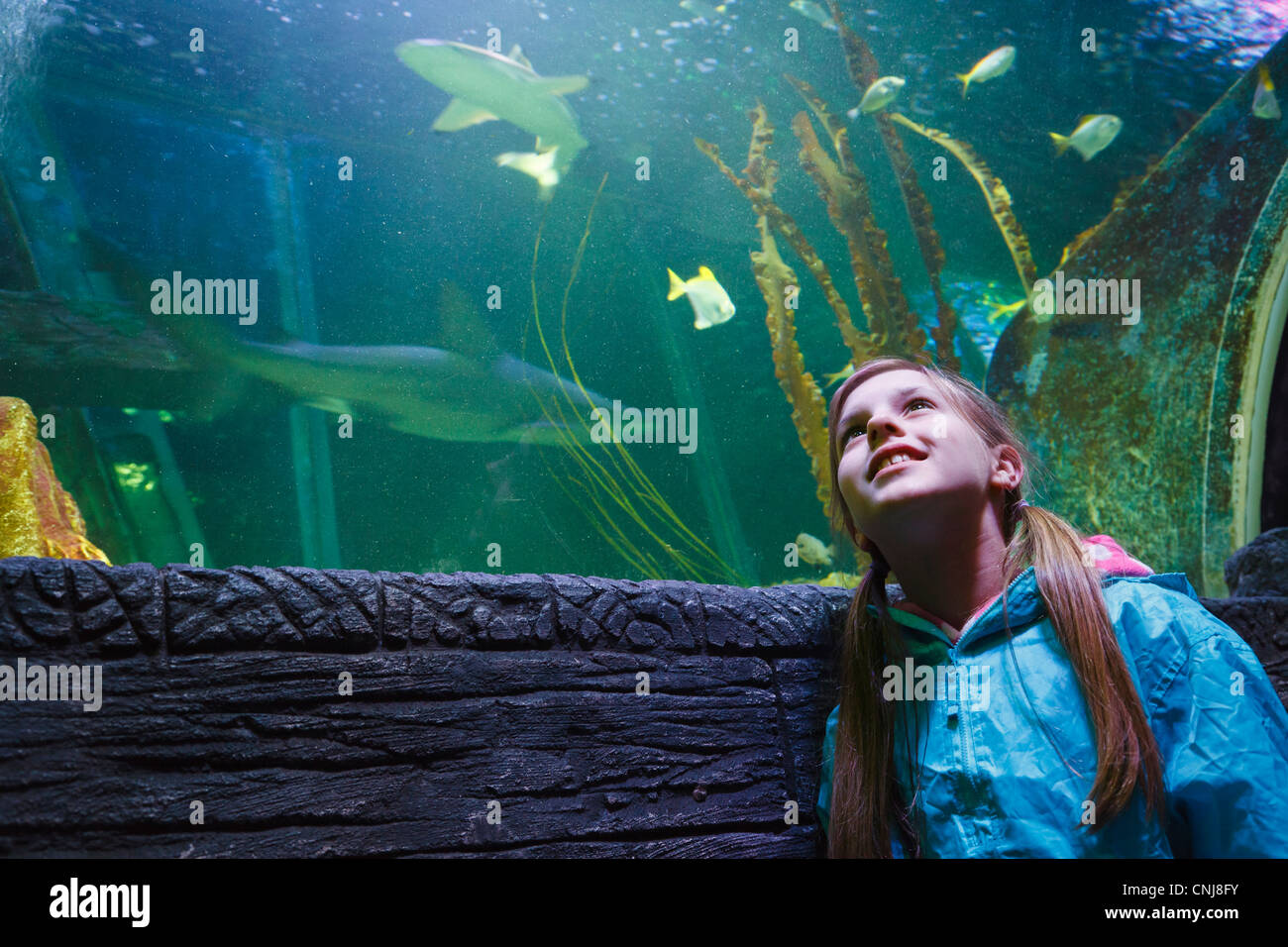 Girl looking at the fish from the 'Ocean Tunnel' at Sea Life aquarium, Blackpool. - Stock Image