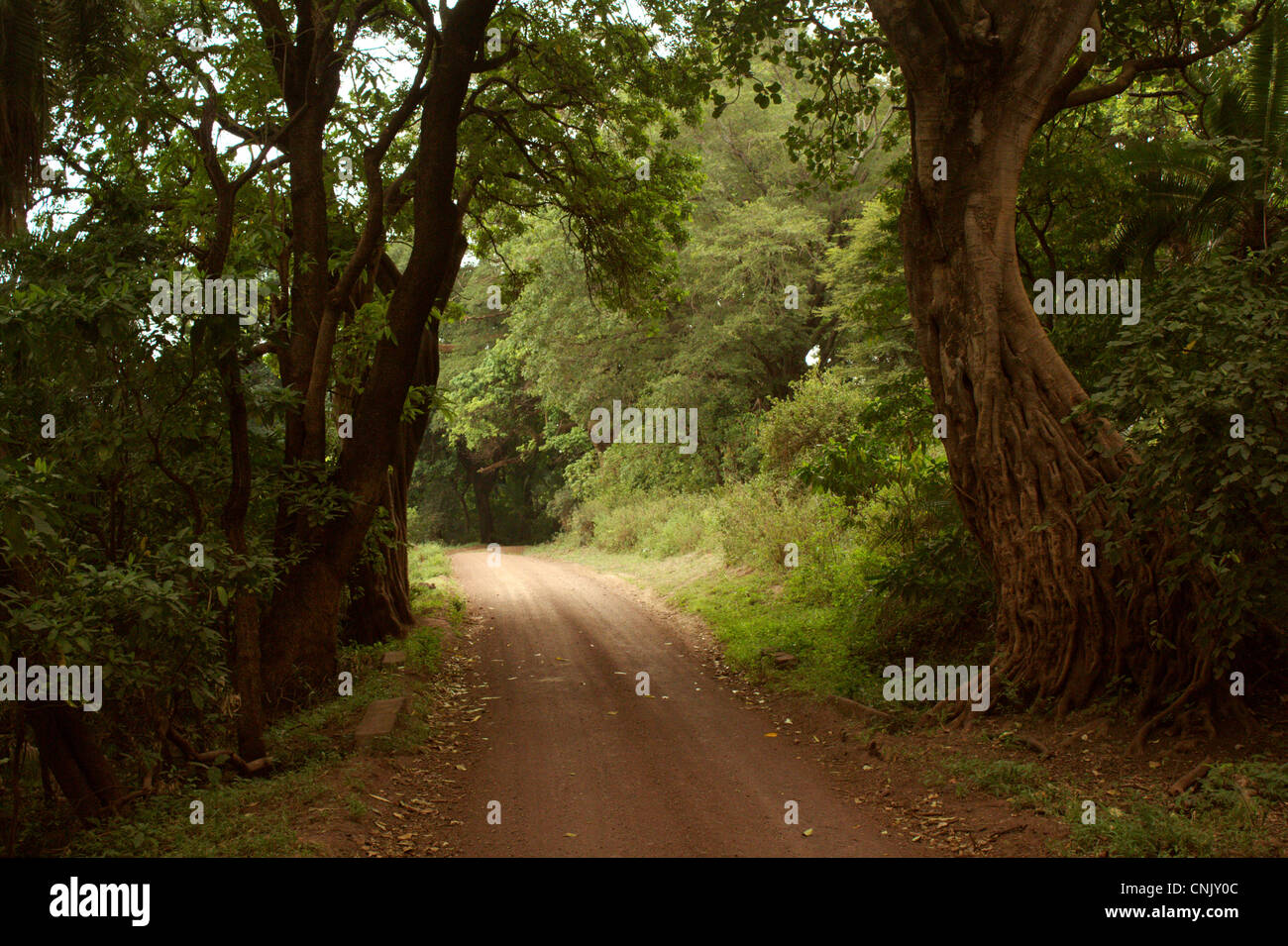 Road across the tropical forest in Lake Manyara National Park, Tanzania - Stock Image