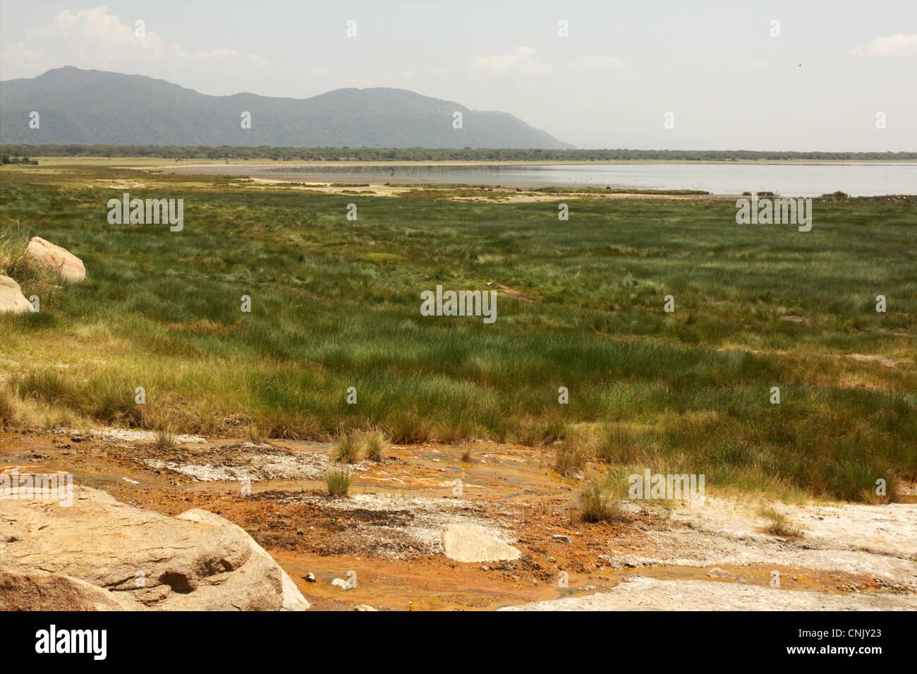 Shore of lake Manyara (National Park), Tanzania - Stock Image