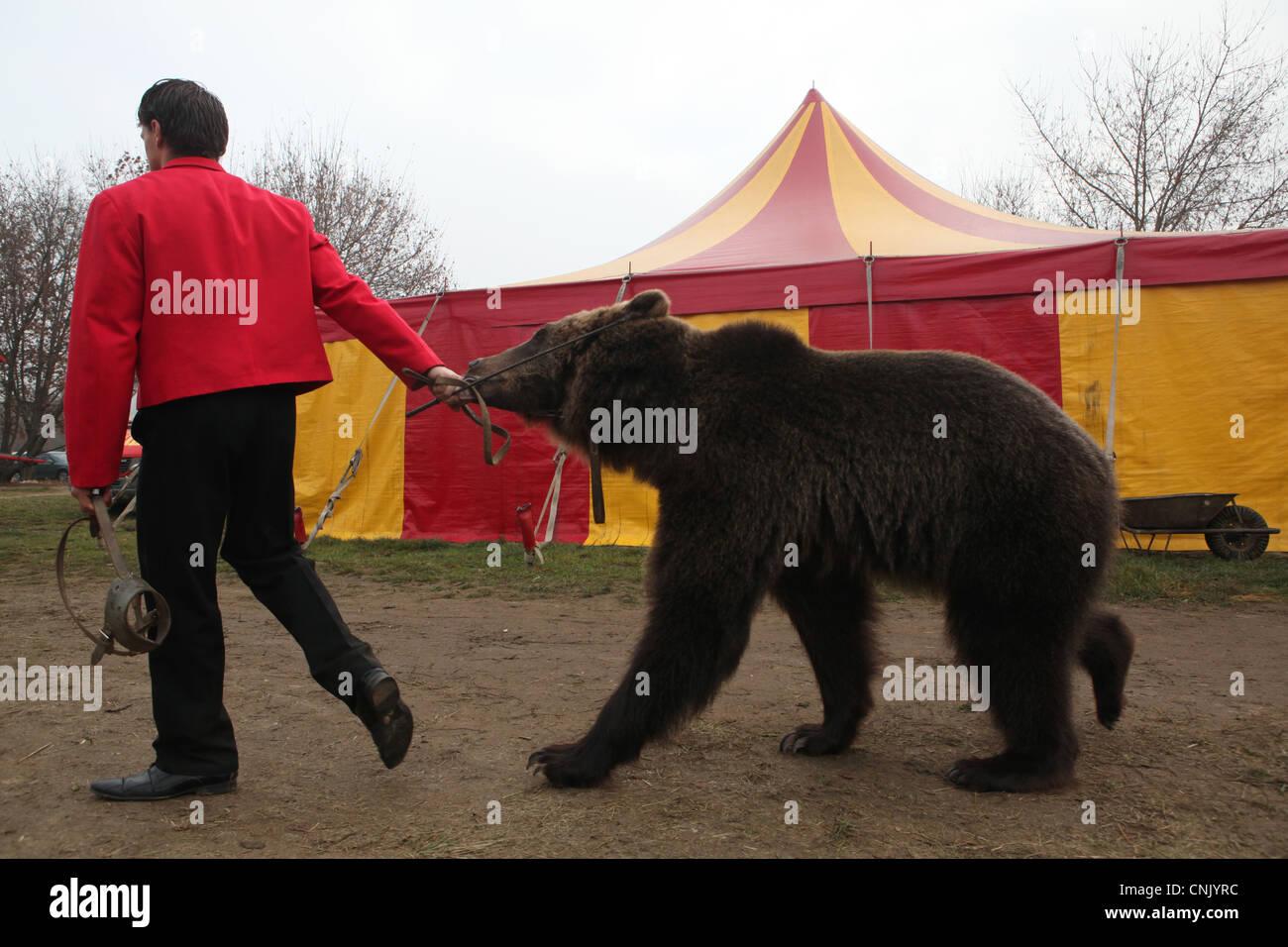 Animal trainer Hynek Navratil Junior and trained bear Matej in Humberto Circus in Prague, Czech Republic. - Stock Image