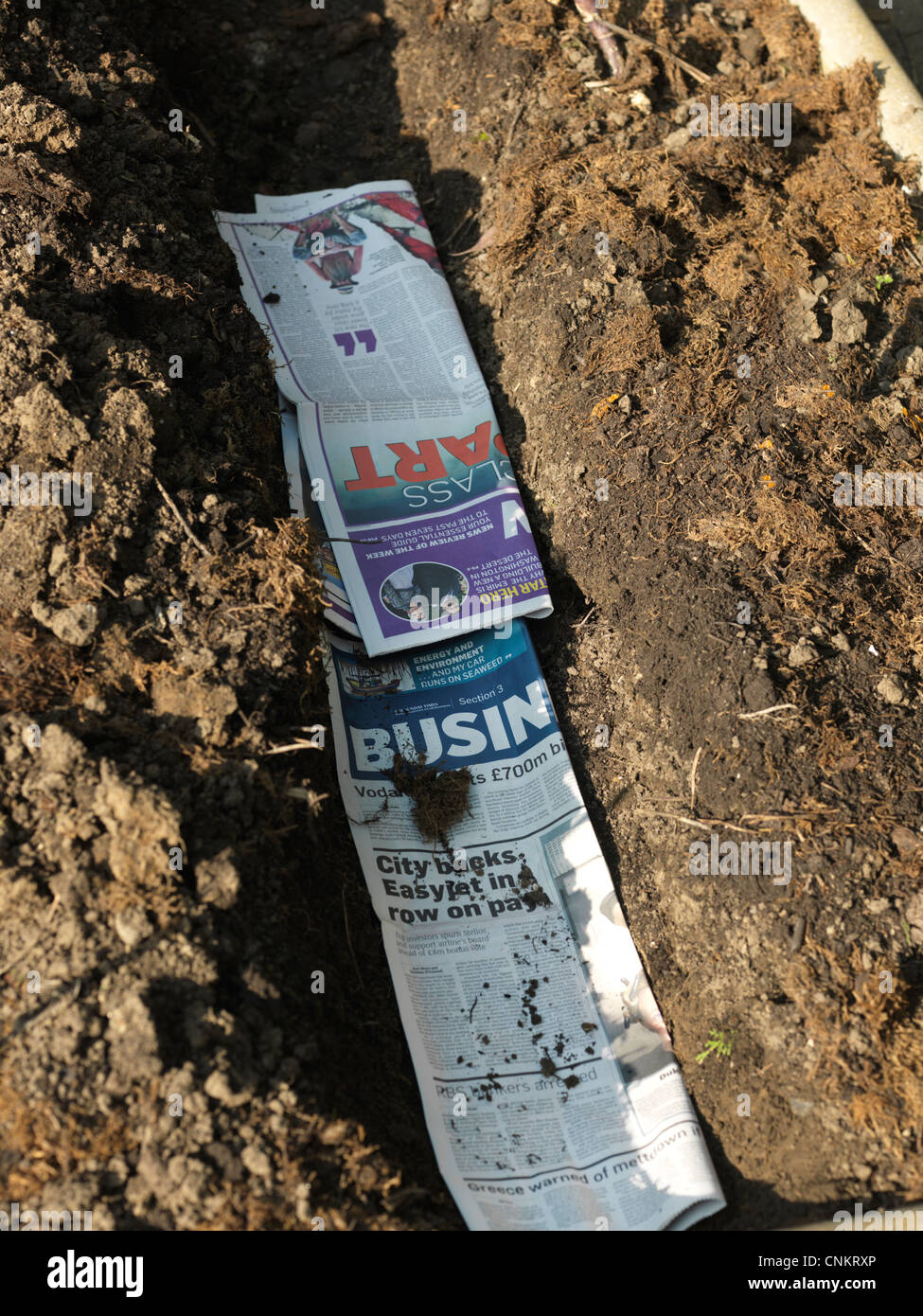 Trench Lined with Newspaper For Planting Potatoes Surrey England - Stock Image