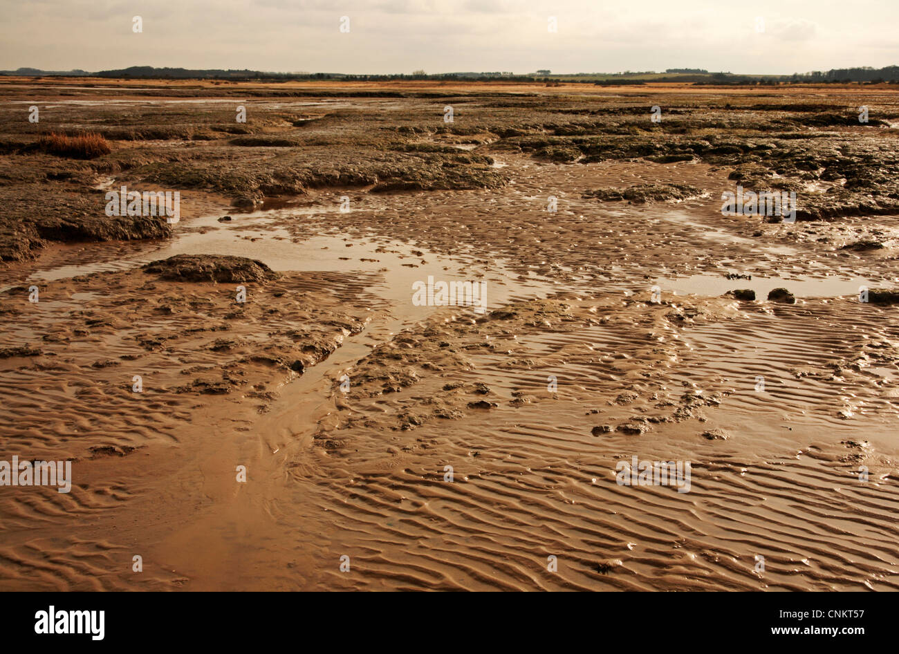 Sands and clays revealed at low tide on the edge of saltings at Stiffkey Freshes, Norfolk, England, United Kingdom. Stock Photo