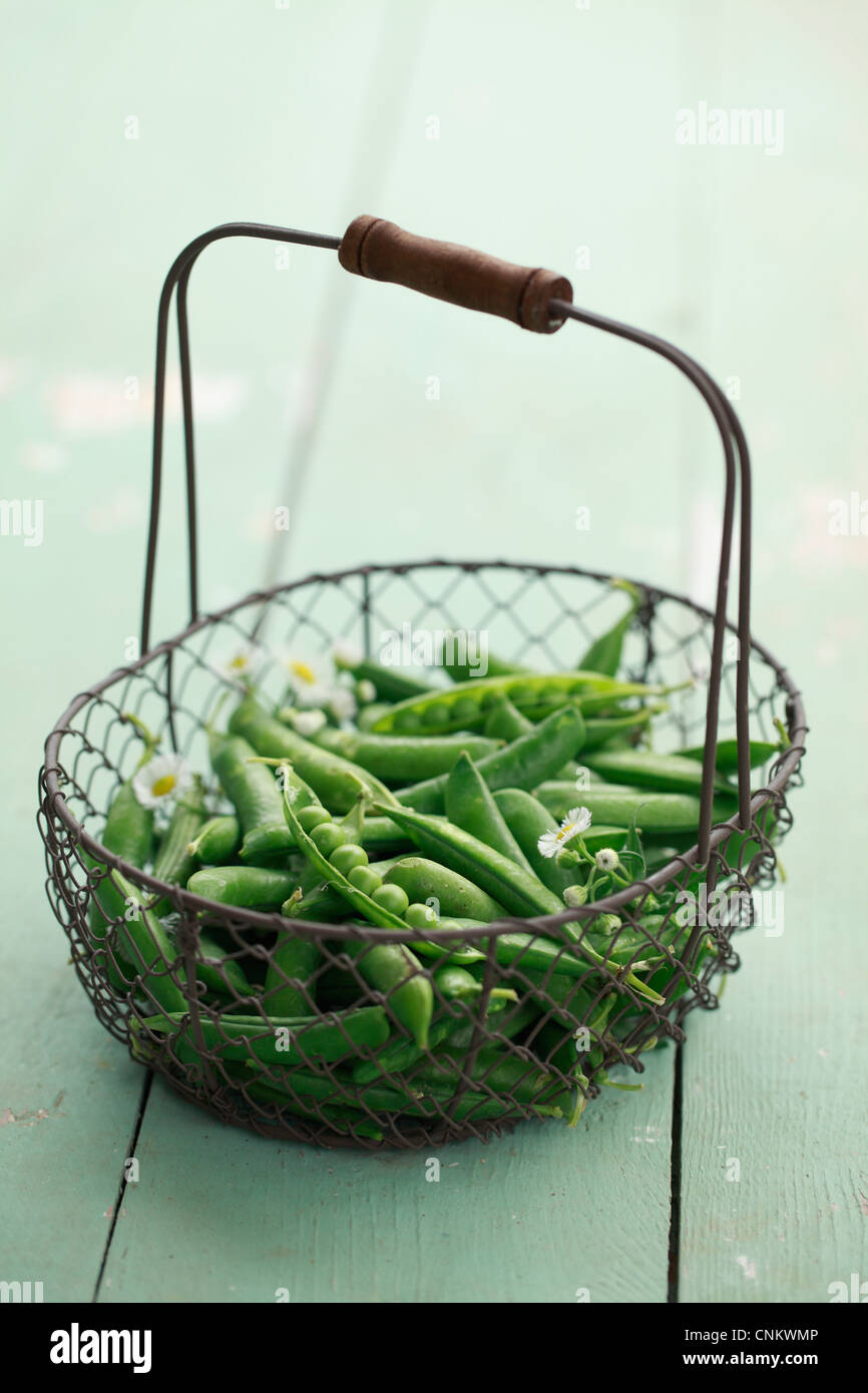 A basket filled with English peas. - Stock Image