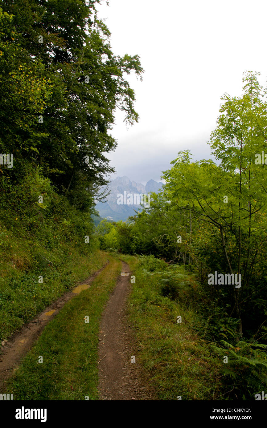 A forest path in the Picos de Europa mountain range in Cantabria Spain - Stock Image