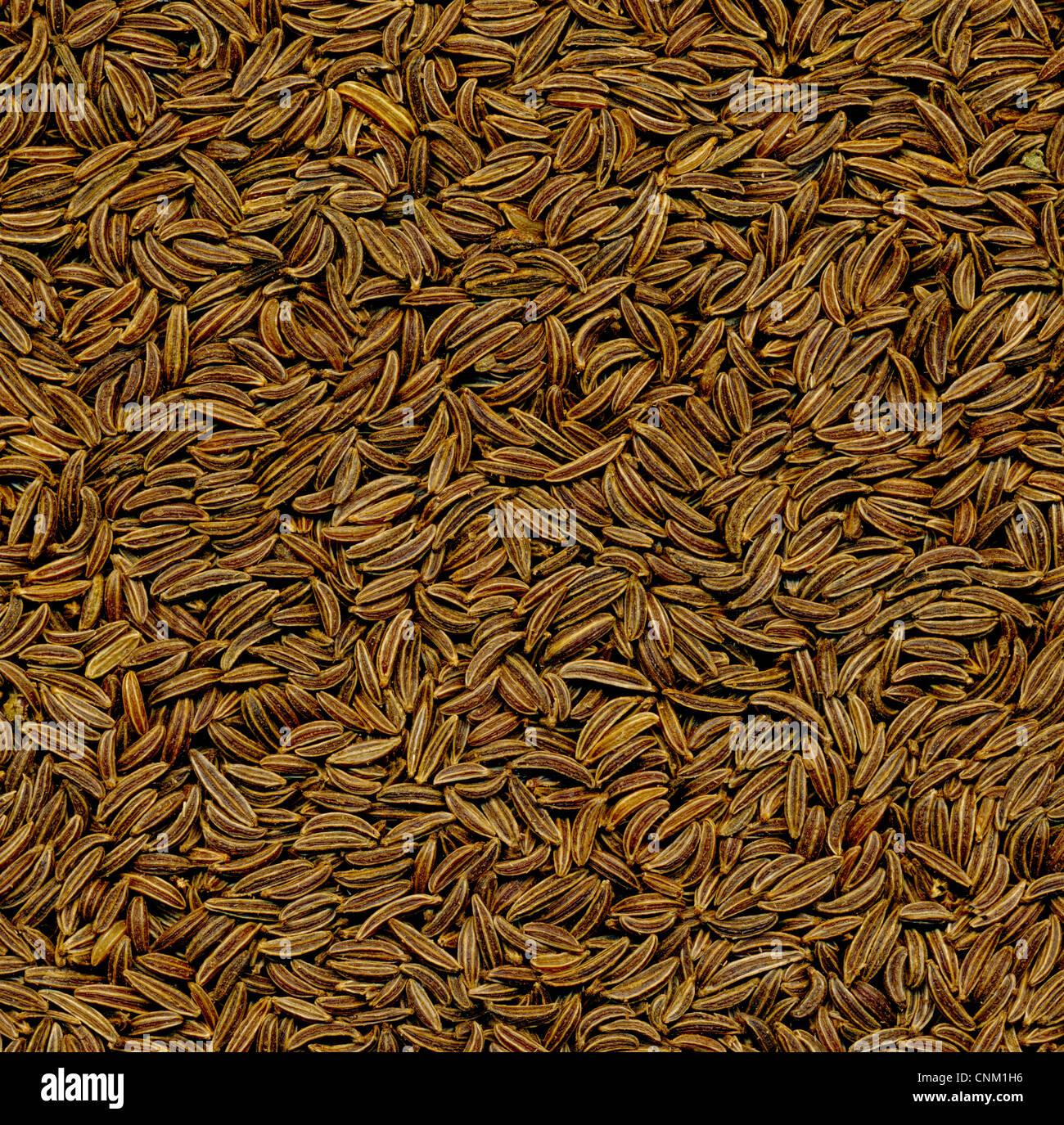 Caraway or cumin, Kümmel, botanisch Wiesenkümmel, Gemeiner Kümmel oder Echter Kümmel (Carum - Stock Image