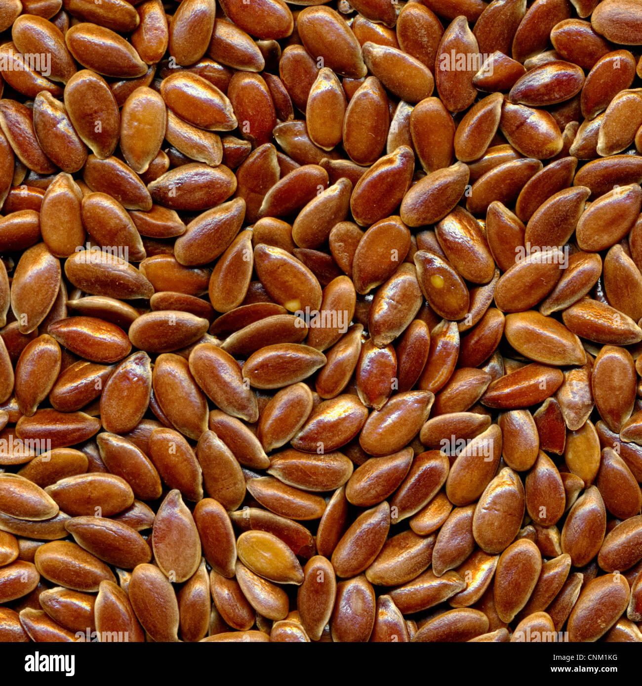 Brown flax seed, Leinsaat, brauner Leinsamen, Samen des Flachses (Gemeiner Lein, Linum usitatissimum) - Stock Image