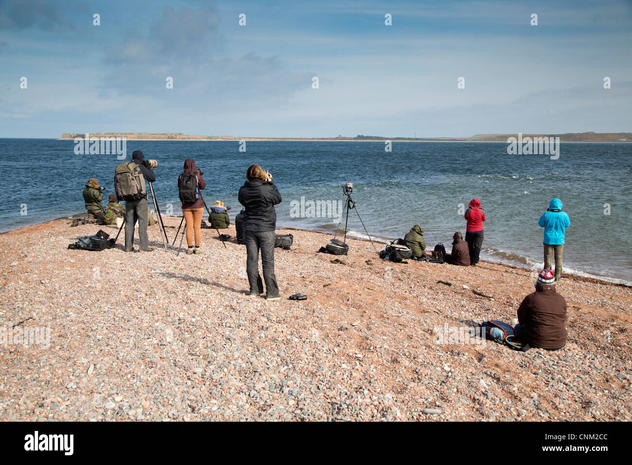 Chanonry Point; Moray Firth; Black Isle; Scotland; UK; watching for dolphins; - Stock Image