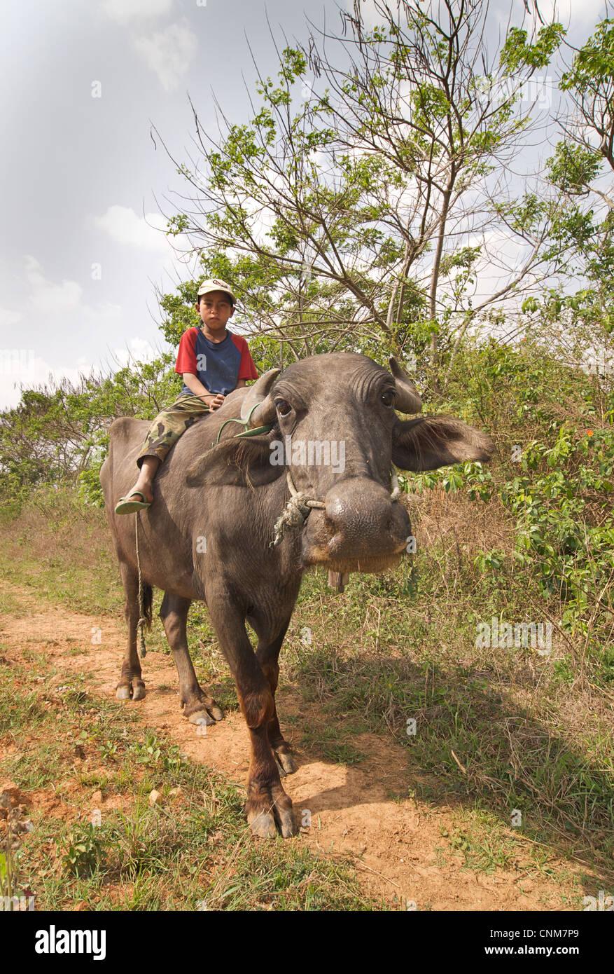 Burmese boy riding on a water buffalo en route to Pindaya, near Kalaw, Burma - Stock Image