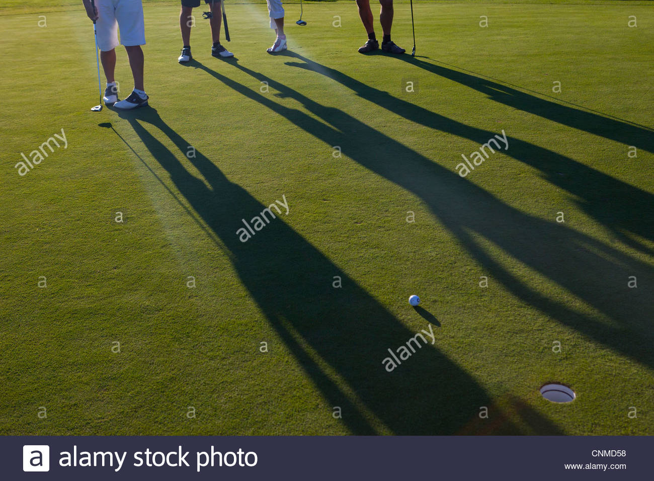 Four golfers on a green, putting the ball - Stock Image