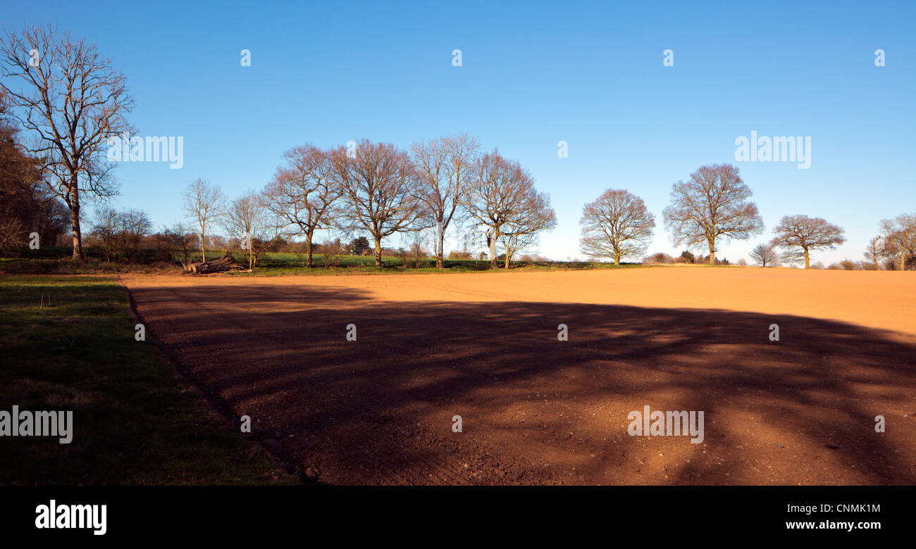 Long tree shadows on farm fields near Shiplake in the Chilterns Oxfordshire England UK - Stock Image