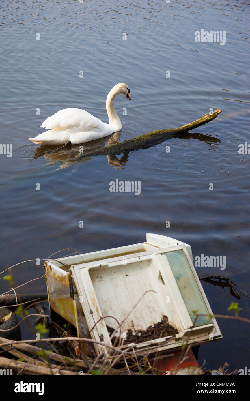 River bank pollution and swan. River pollution, illegal dumping of a fridge in a river, affecting local wildlife. - Stock Image