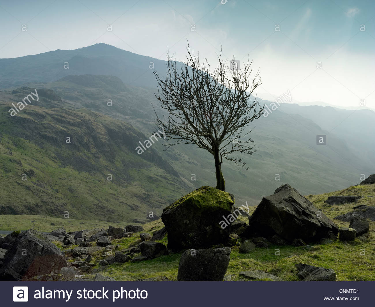 Tree growing in rocky rural landscape - Stock Image