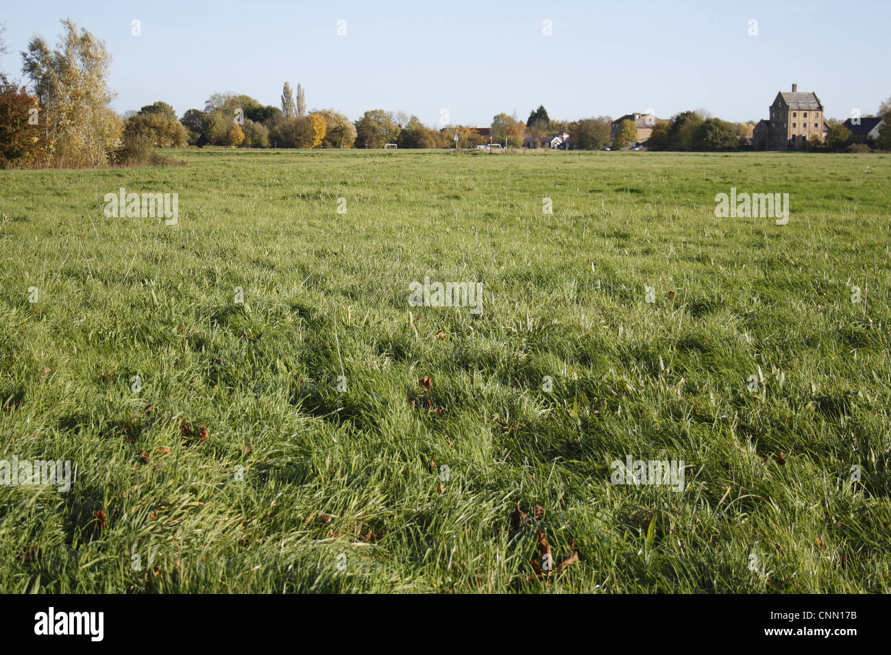 View of commonland reserve, The Carnser, Mellis Common, Mellis, Suffolk, England, october - Stock Image