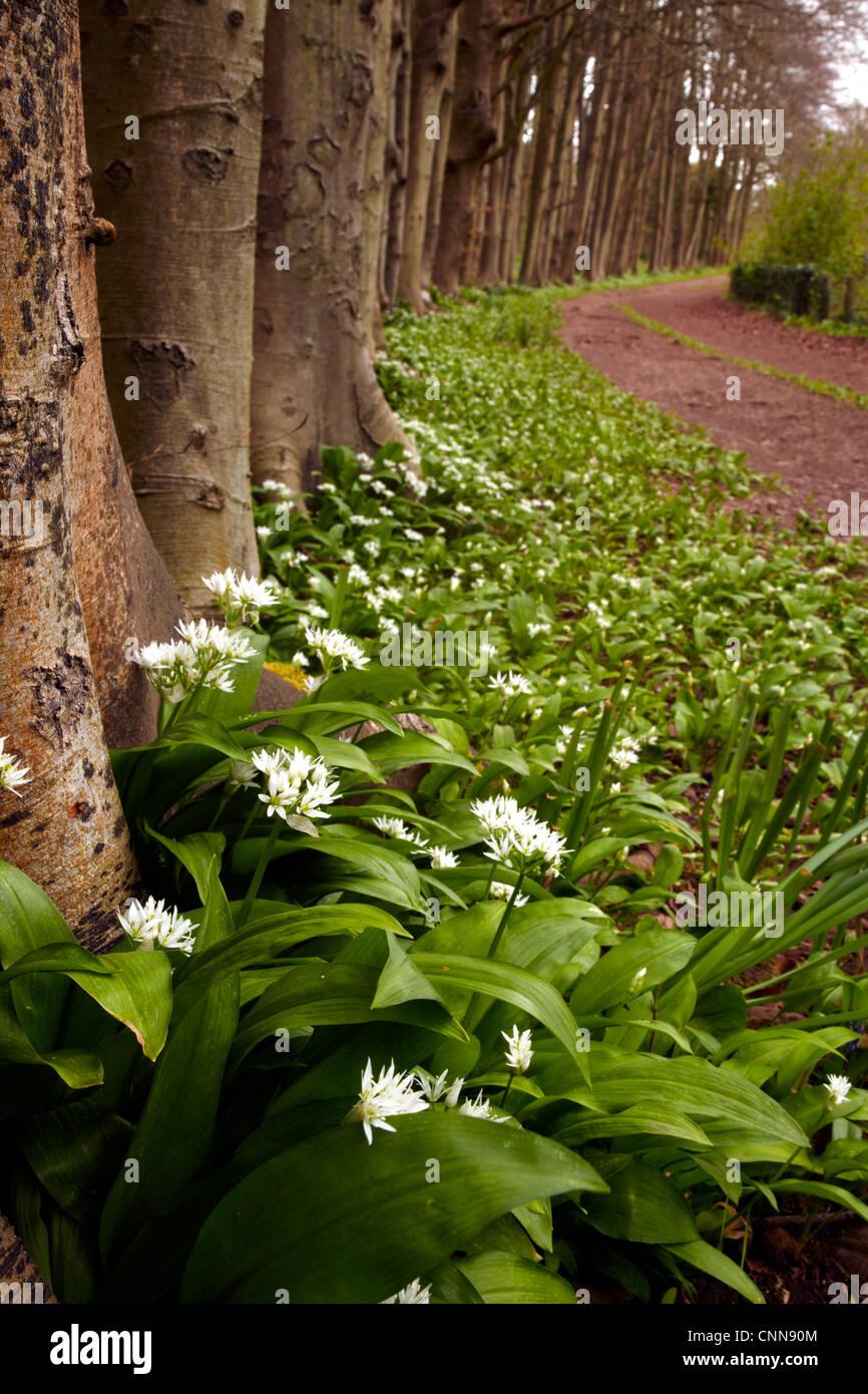 Trillium Flowering In Oak Grove >> Woodland Flowers Stock Photos & Woodland Flowers Stock Images - Alamy
