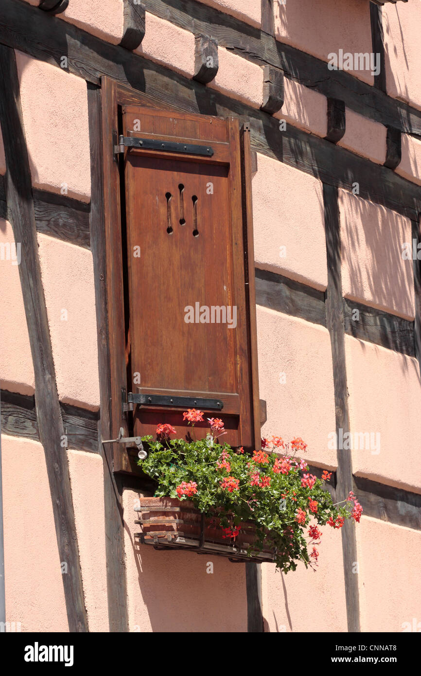 geraniums in a window box medieval half timbered house Ribeauville Alsace France - Stock Image