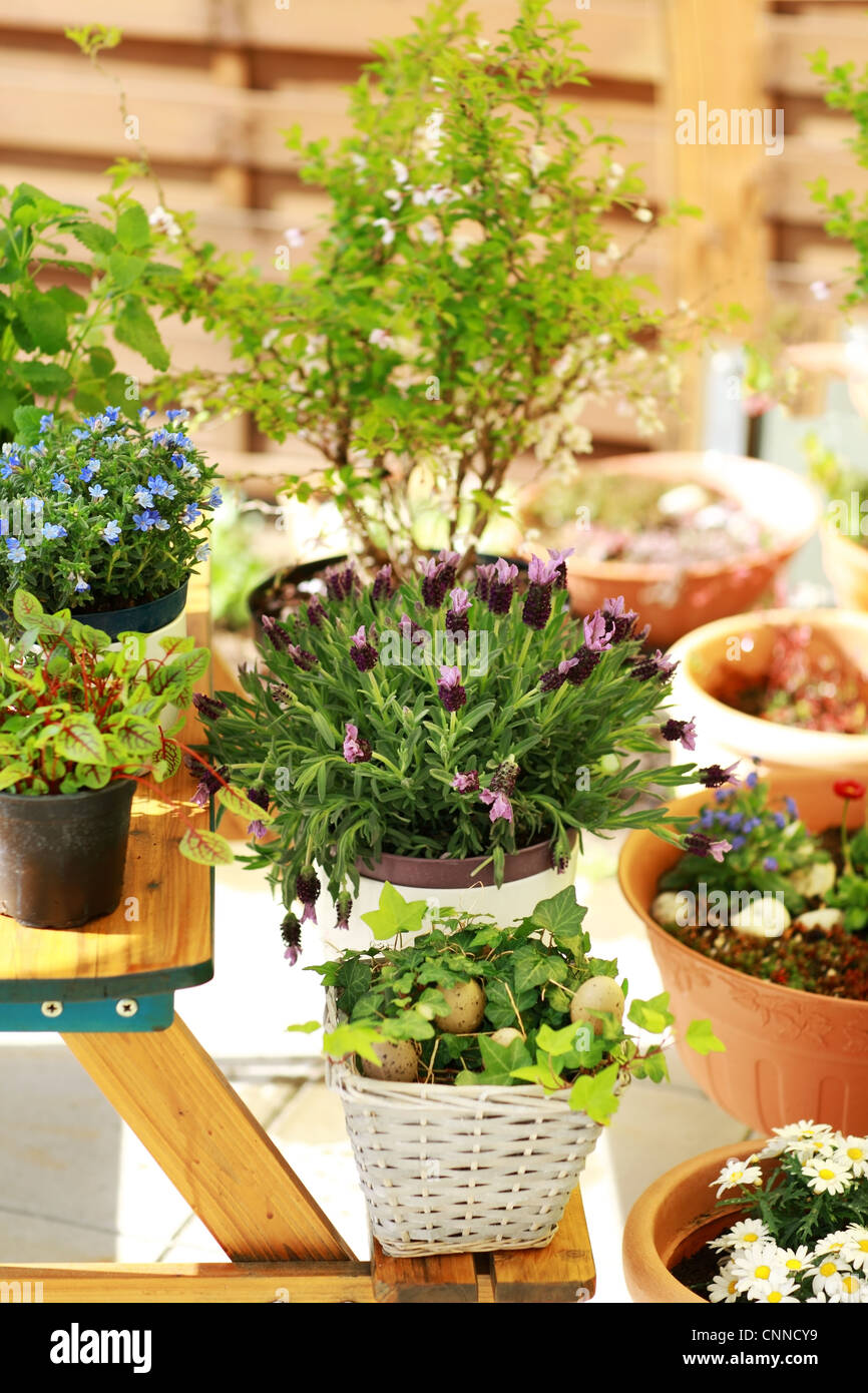 Outdoor flower pots for small garden, patio or terrace - Stock Image