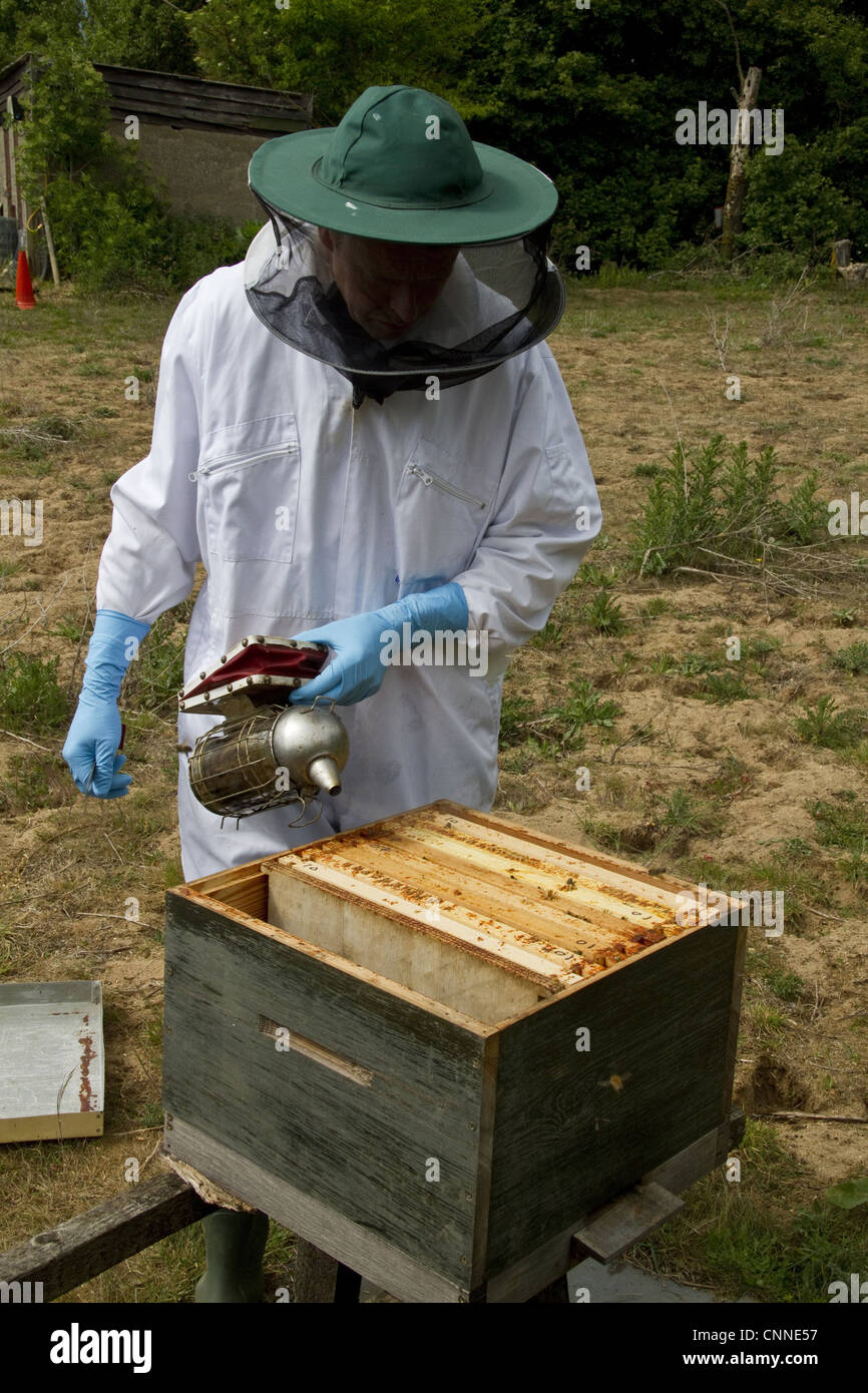Using smoker over open brood box part bee hive exposed wax