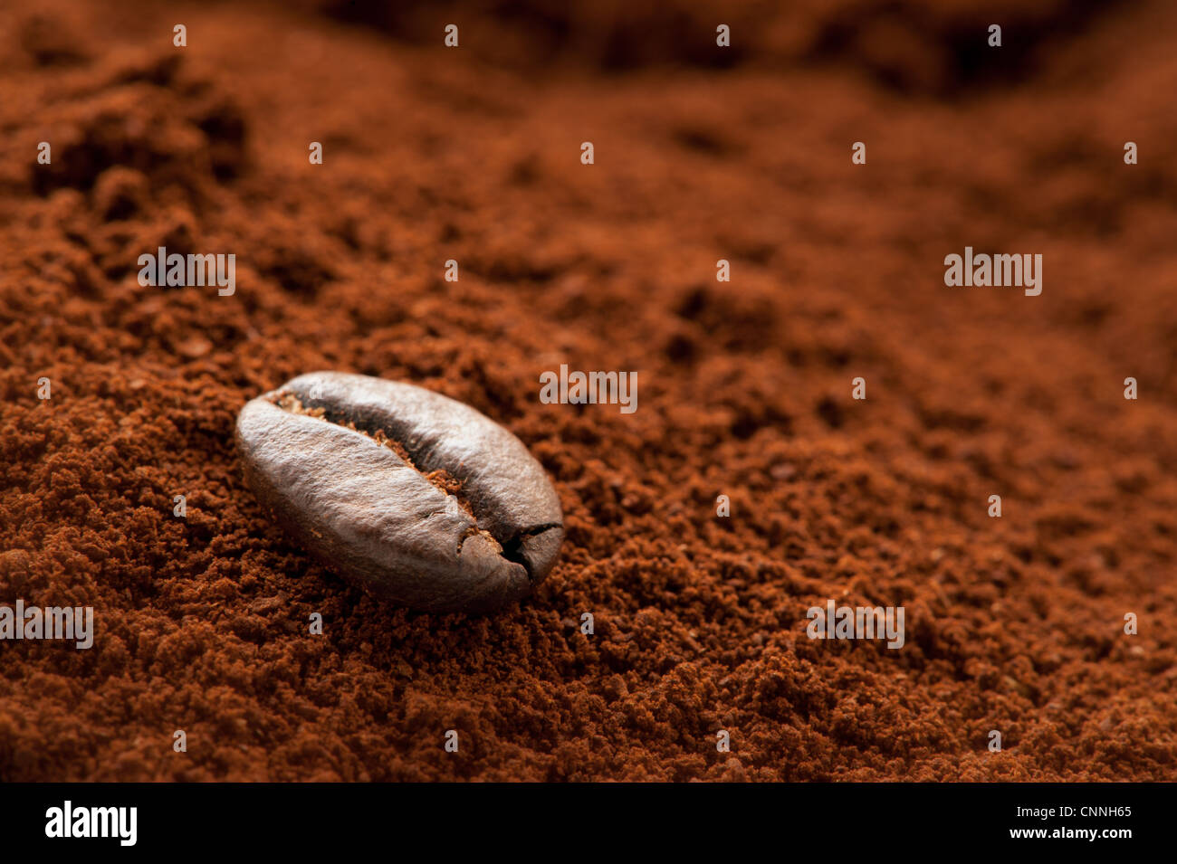 A solitary coffee bean on a mound of fresh coffee grounds - Stock Image