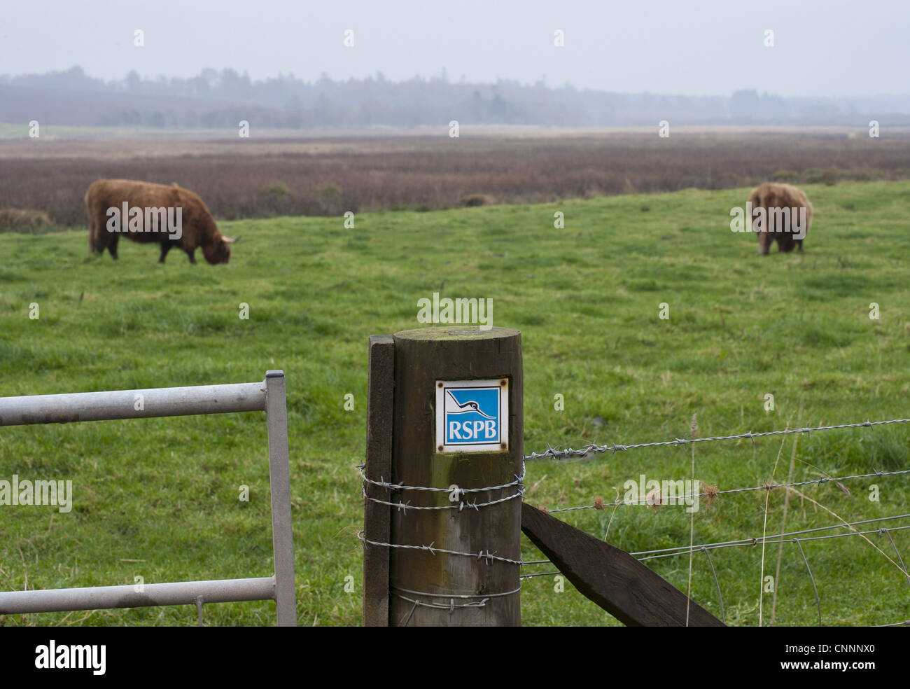RSPB sign gatepost Highland Cattle grazing pasture background Loch Kinnordy RSPB Nature Reserve Kingoldrum Angus - Stock Image