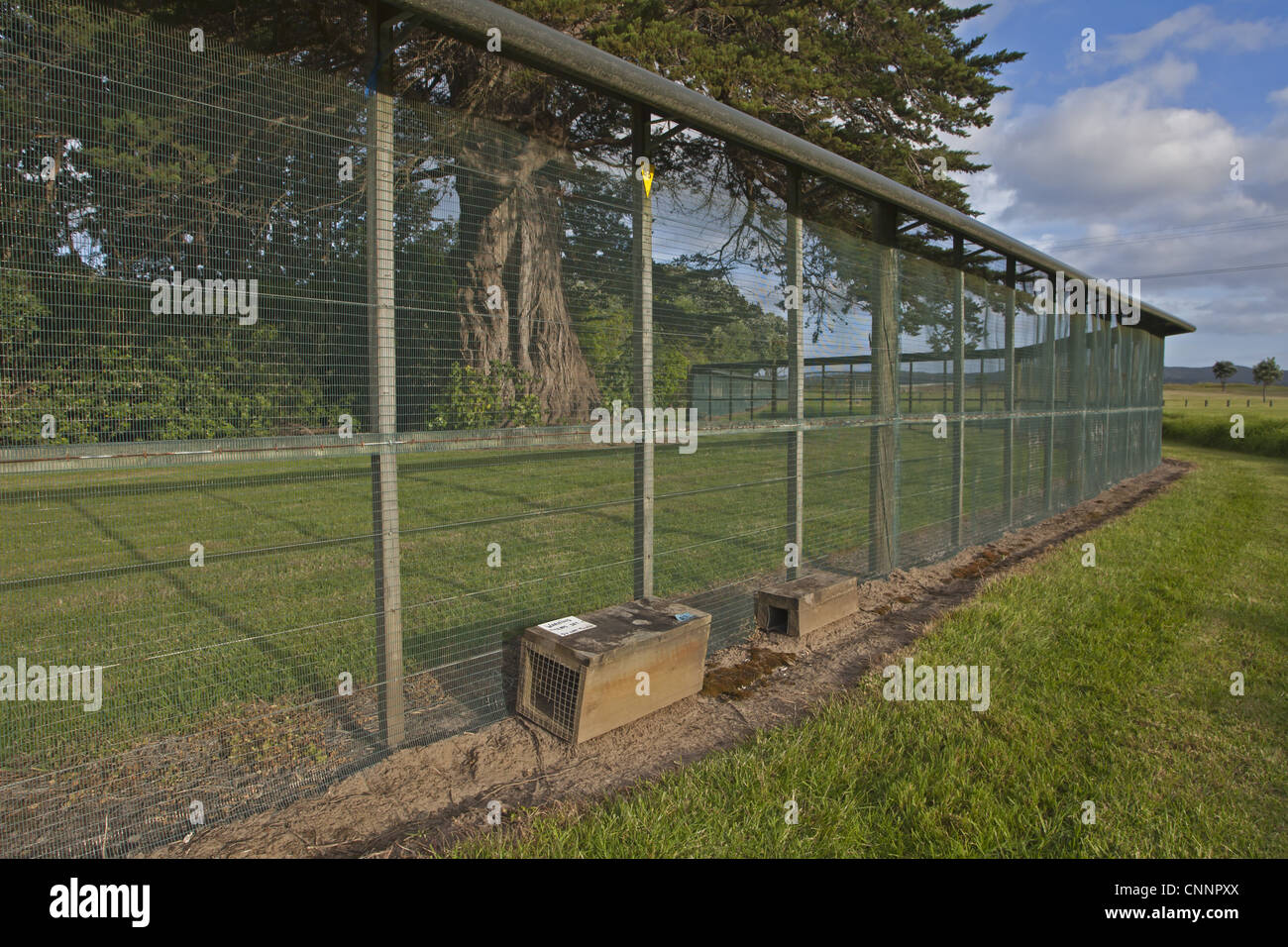 Anti-predator fence and traps, to exclude introduced predators from area, New Zealand, november - Stock Image