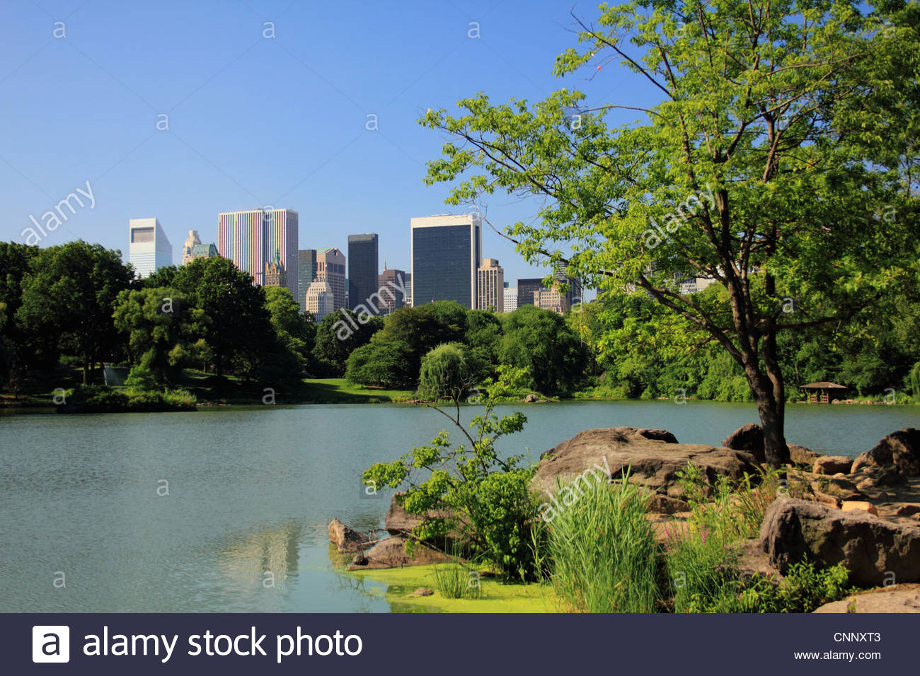 Still lake in Central Park - Stock Image