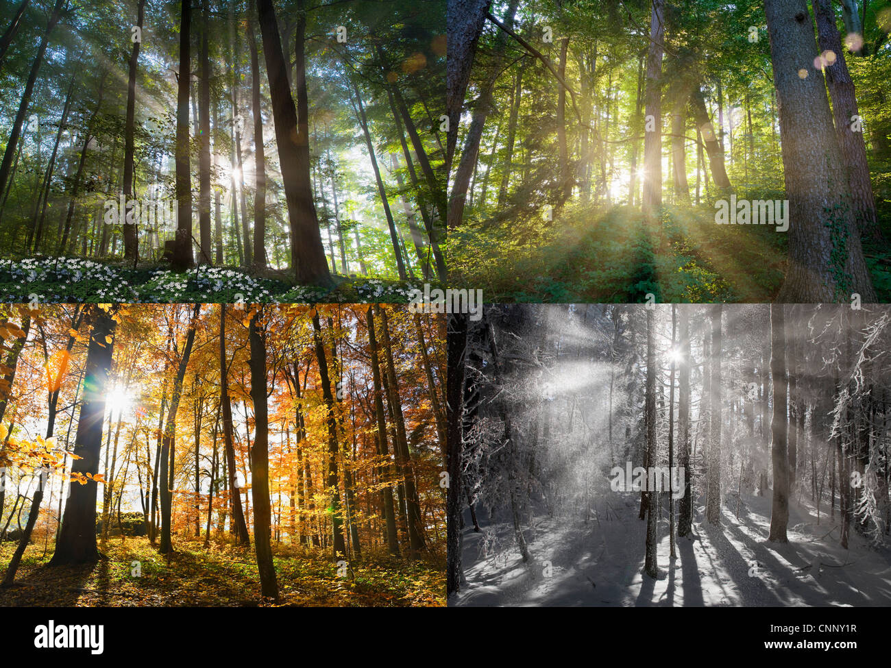 Views of four seasons of forest - Stock Image