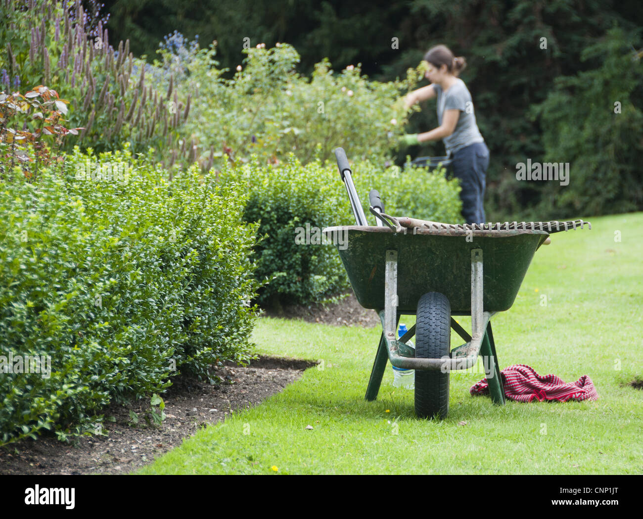 Wheelbarrow on lawn at edge of borders, gardener pruning in background, Middle Claydon, Buckinghamshire, England, - Stock Image