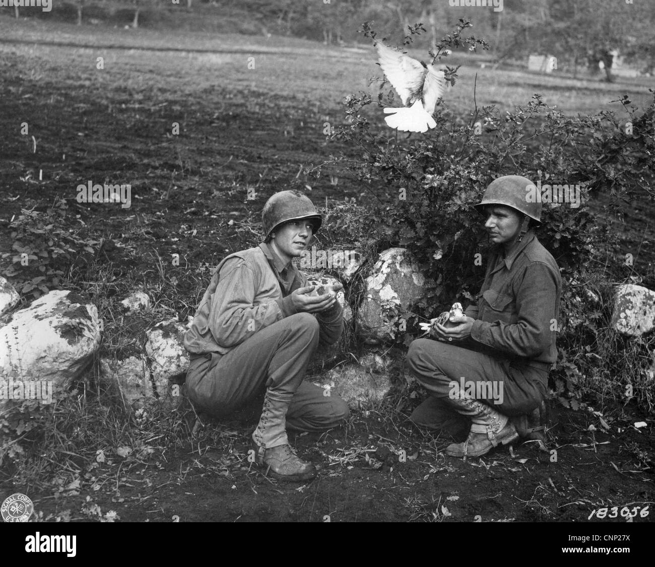 American soldiers Divisional Signal Company releasing courier pigeons frontline during World War Two near Liberi - Stock Image