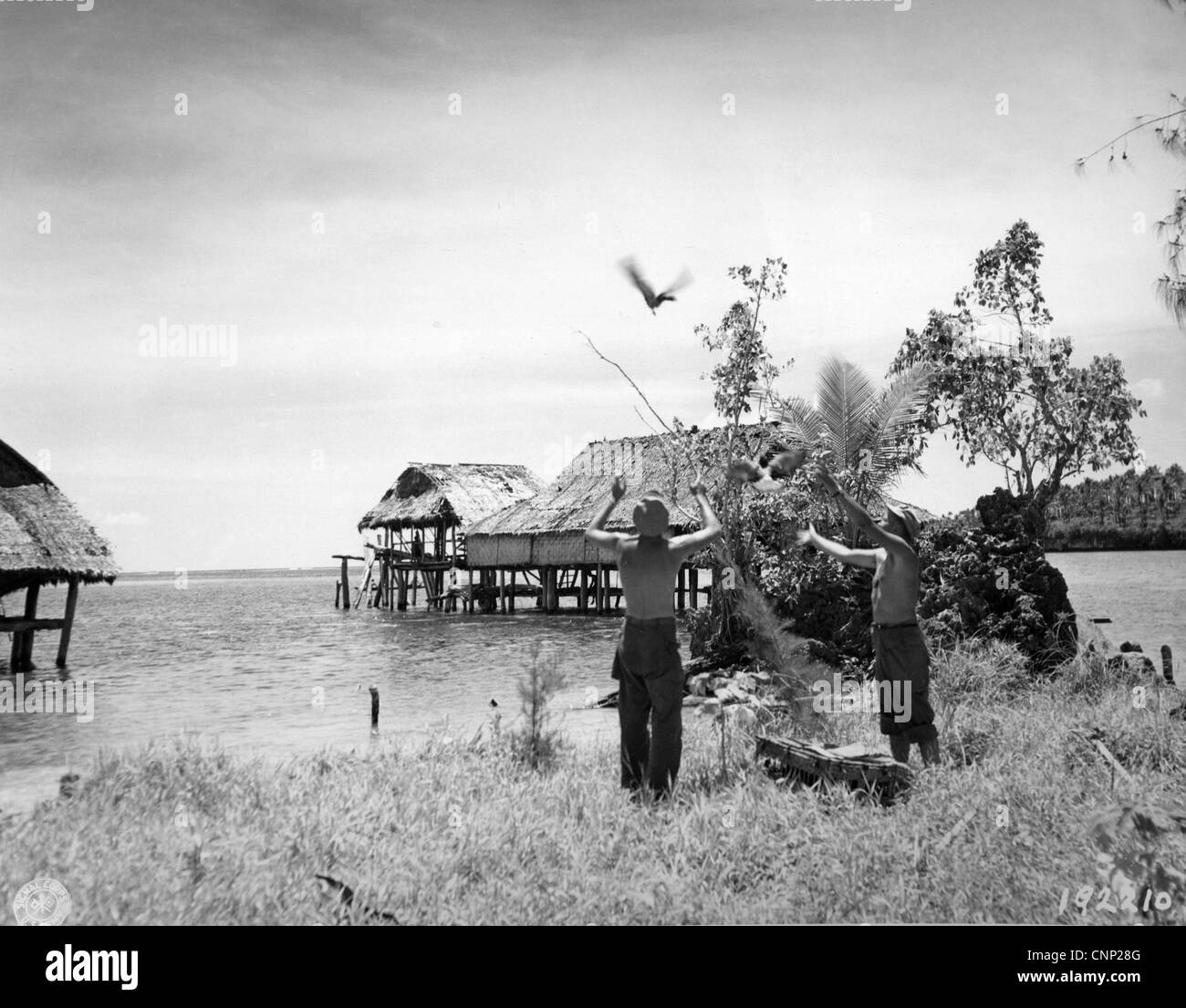 American soldiers Reconnaissance Troop 1st Cavalry Divison releasing courier pigeons messages headquarters during - Stock Image