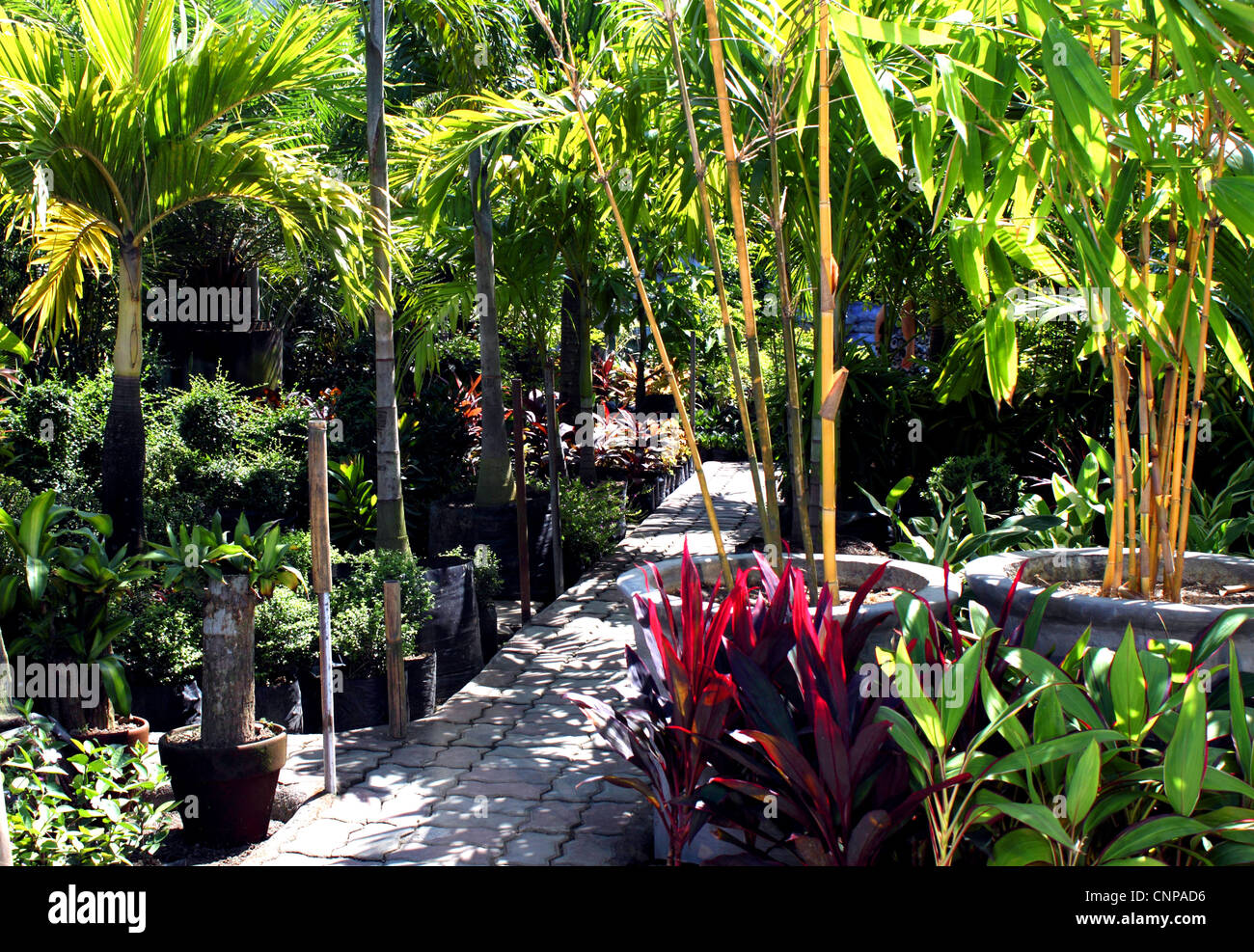 Private Botanical Garden and nursery with variety of tropical plants - Stock Image