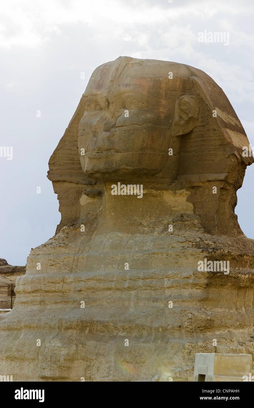 pliny the elder natural history pdf