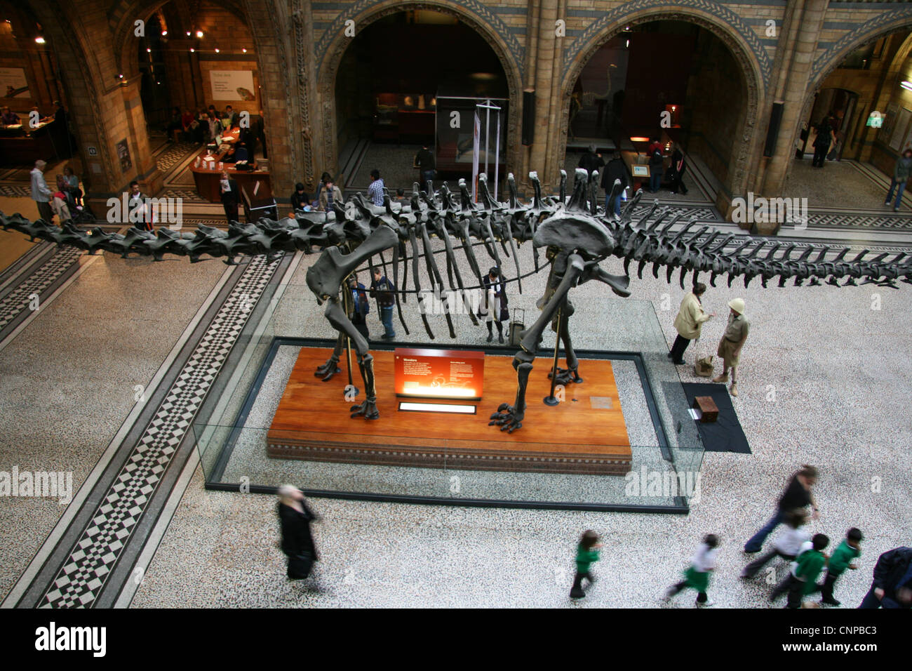 The main hall of the London Natural History Museum. England, UK. - Stock Image