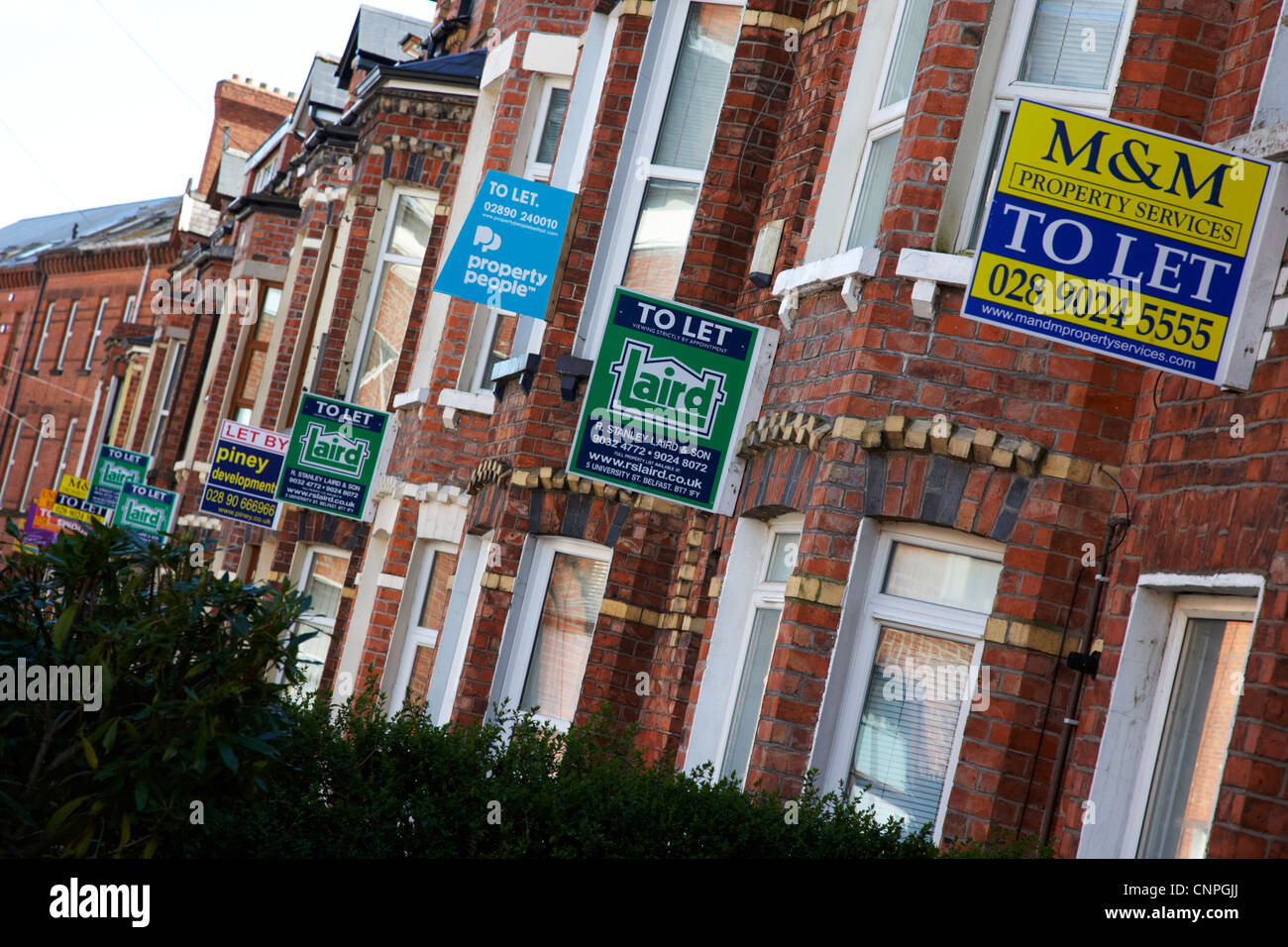 row of houses with to let signs in a student residential area of Belfast Northern Ireland UK Stock Photo