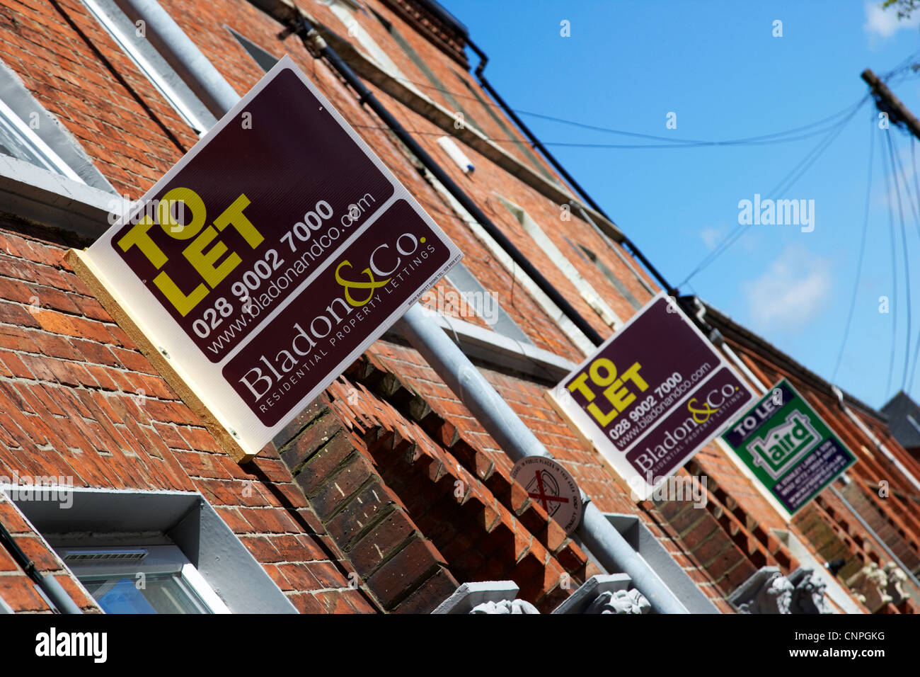 row of houses with to let signs in a student residential area of Belfast Northern Ireland UK - Stock Image