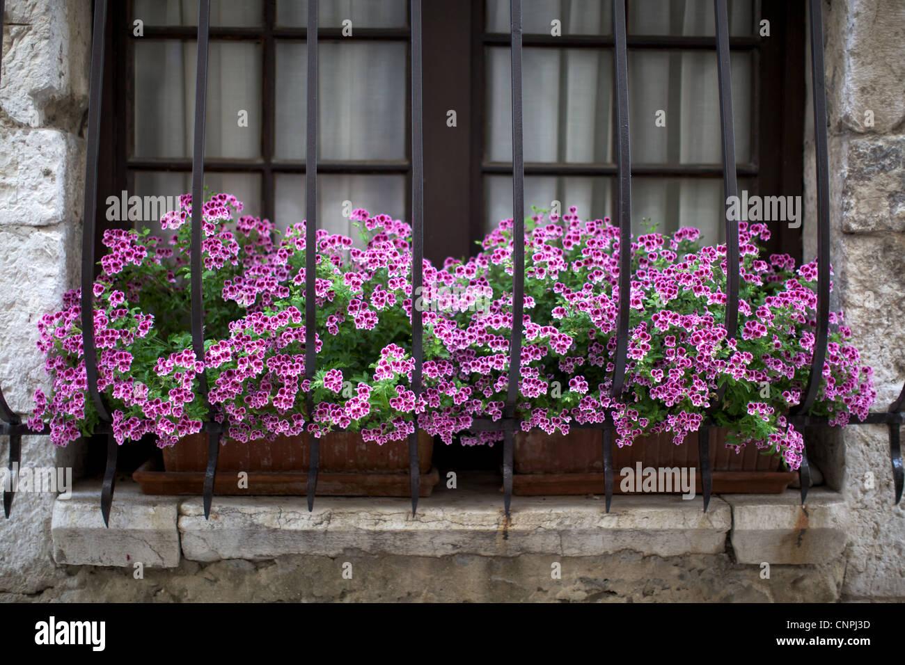 flower [flower box] [close up] windowsill villa - Stock Image