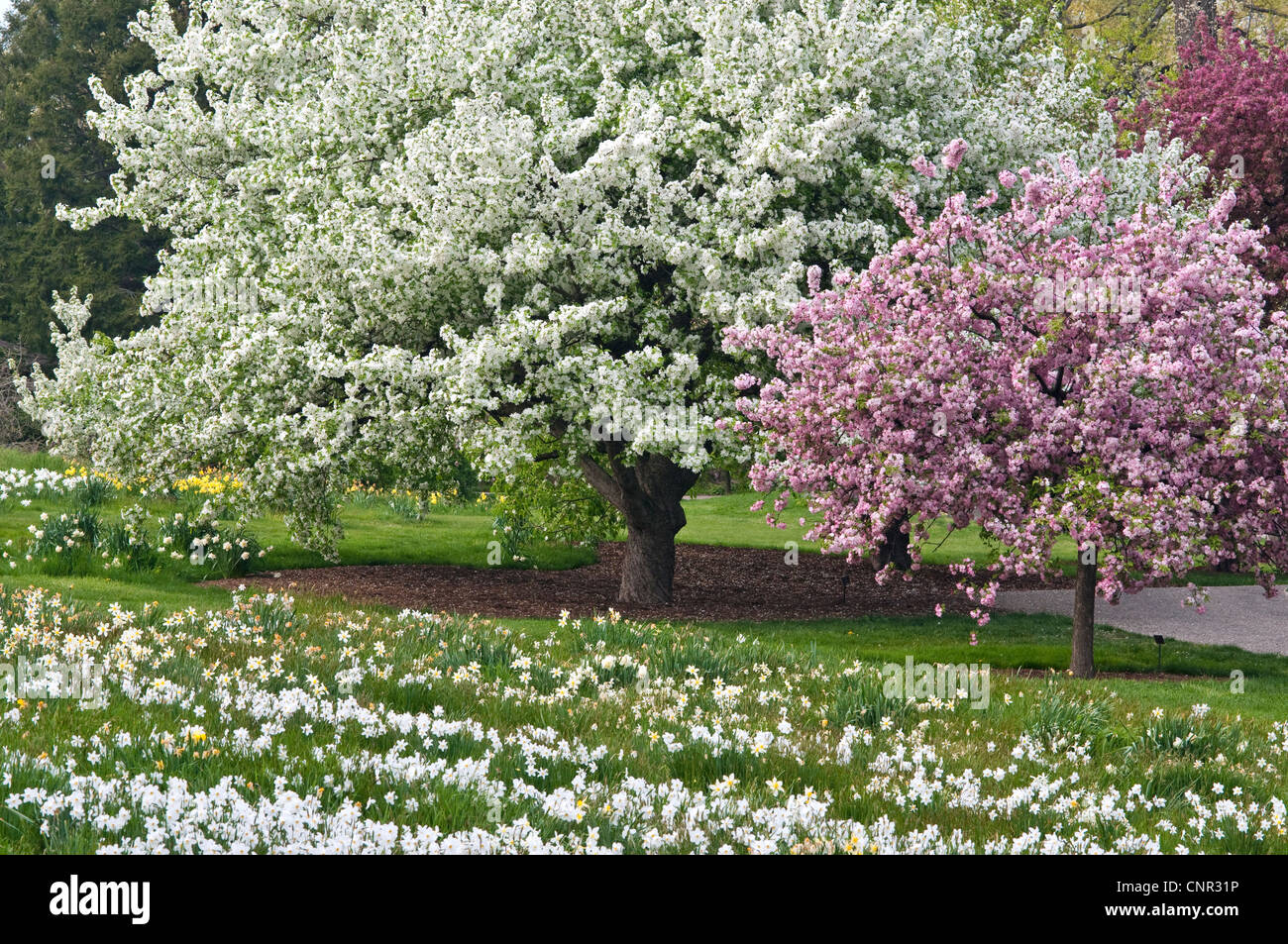 Crabapple Trees Stock Photos Crabapple Trees Stock Images Alamy