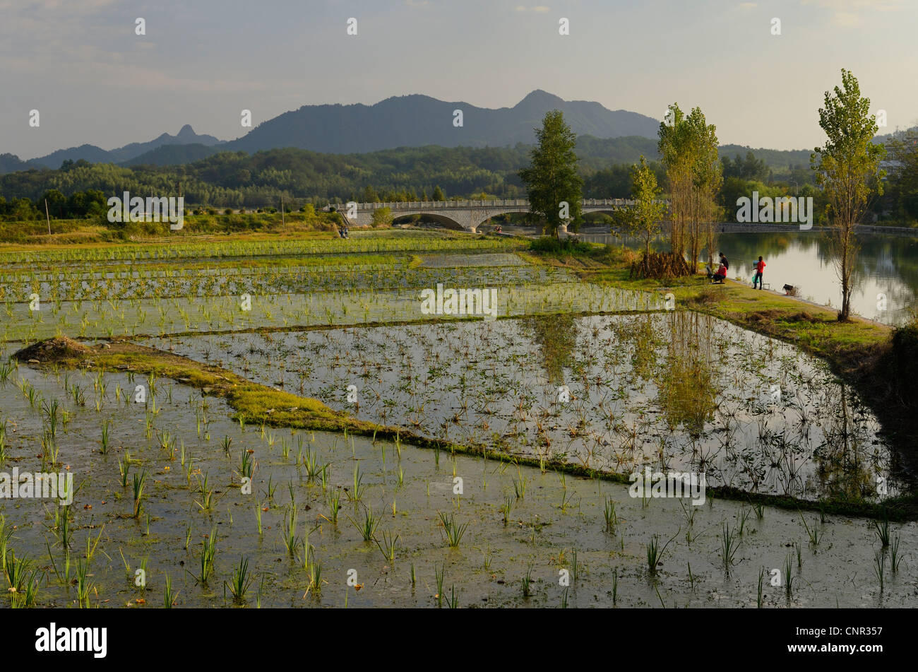 Flooded rice paddies and painters along the Jiyin stream at Hongcun in Anhui Province China - Stock Image