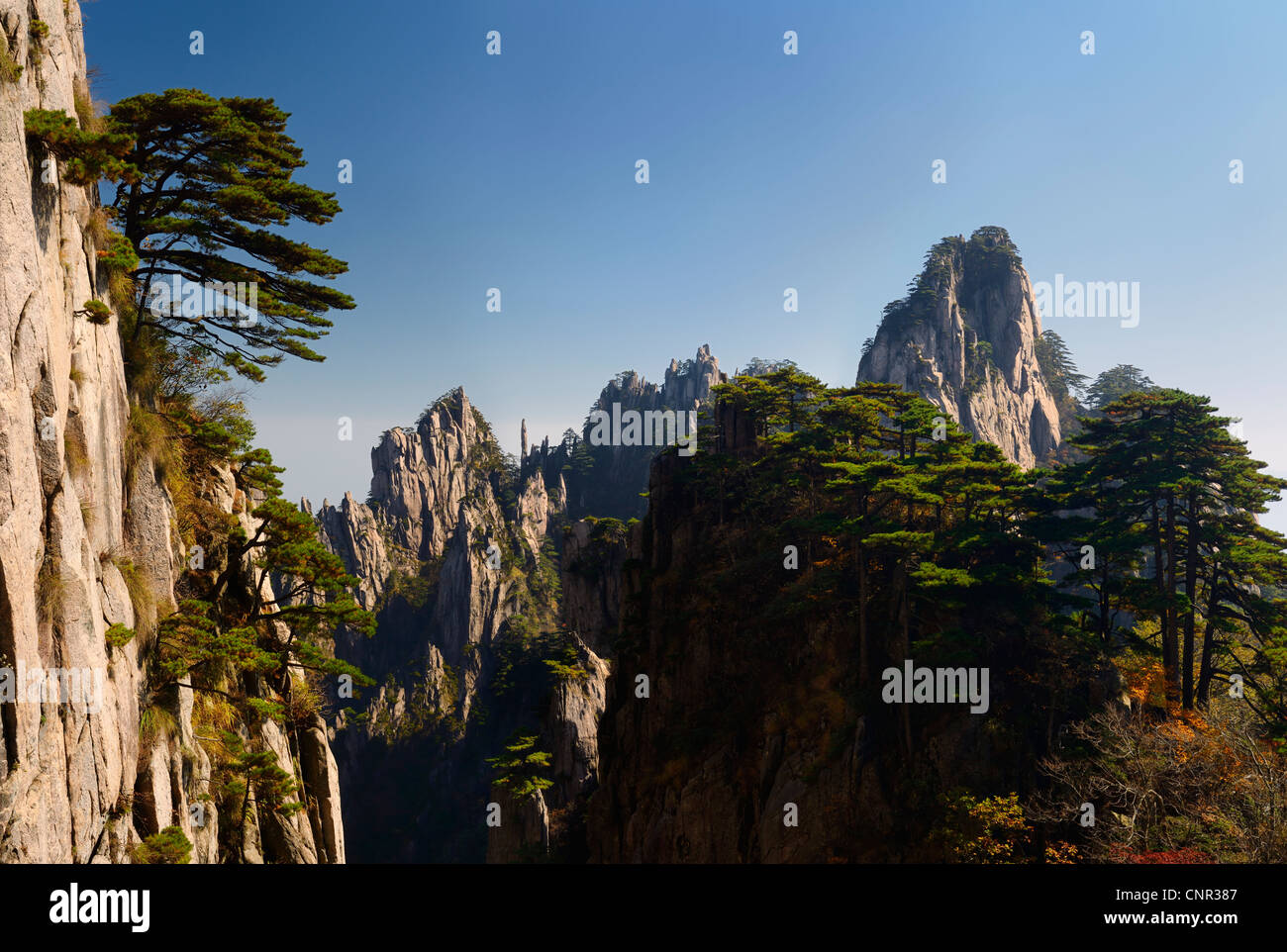 Pine trees on Beginning to Believe Peak with Stalagmite Gang at Mount Huangshan Yellow Mountain China - Stock Image