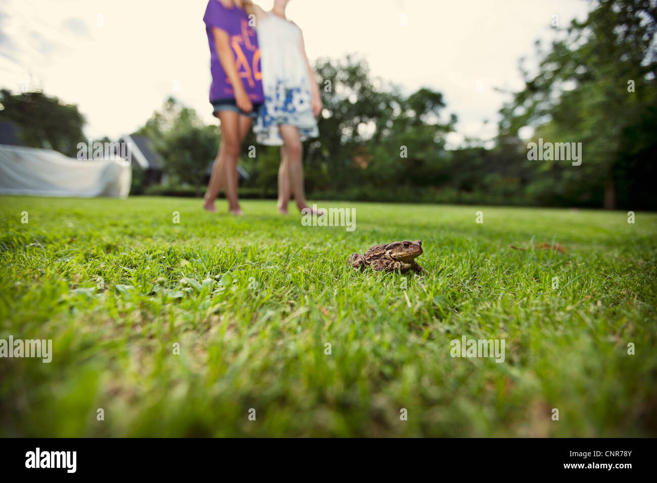 Frog crouched in grass in backyard Stock Photo