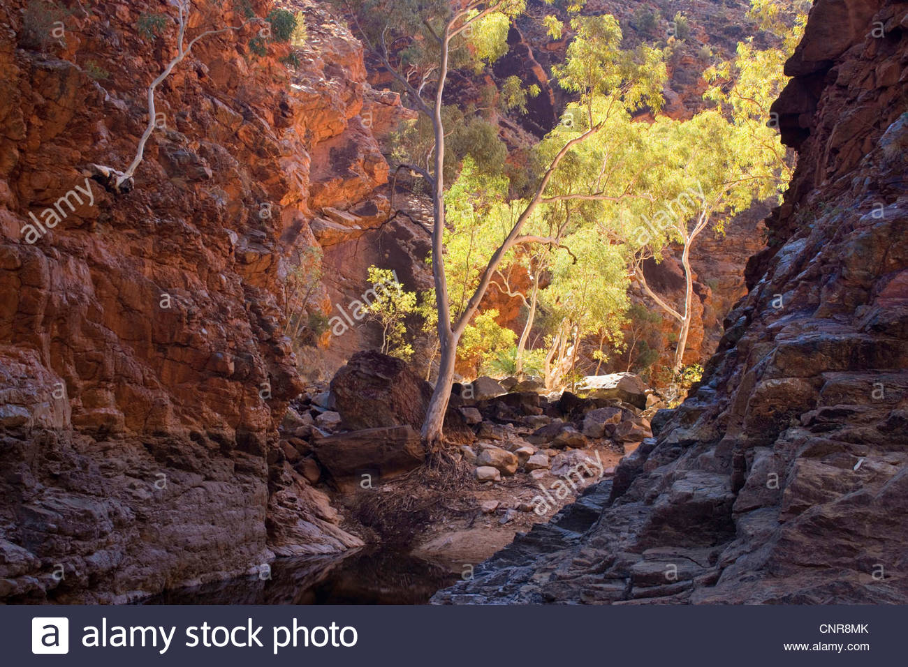 towering red cliffs at the entrance of Serpentinge Gorge and a semi-permanent waterhole, Australia, Northern Territory, - Stock Image