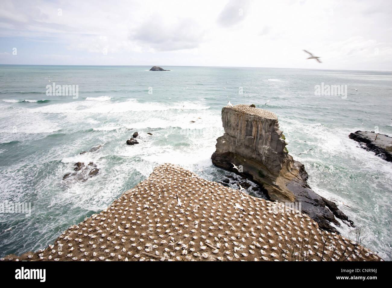 Craggy rock jutting into ocean - Stock Image