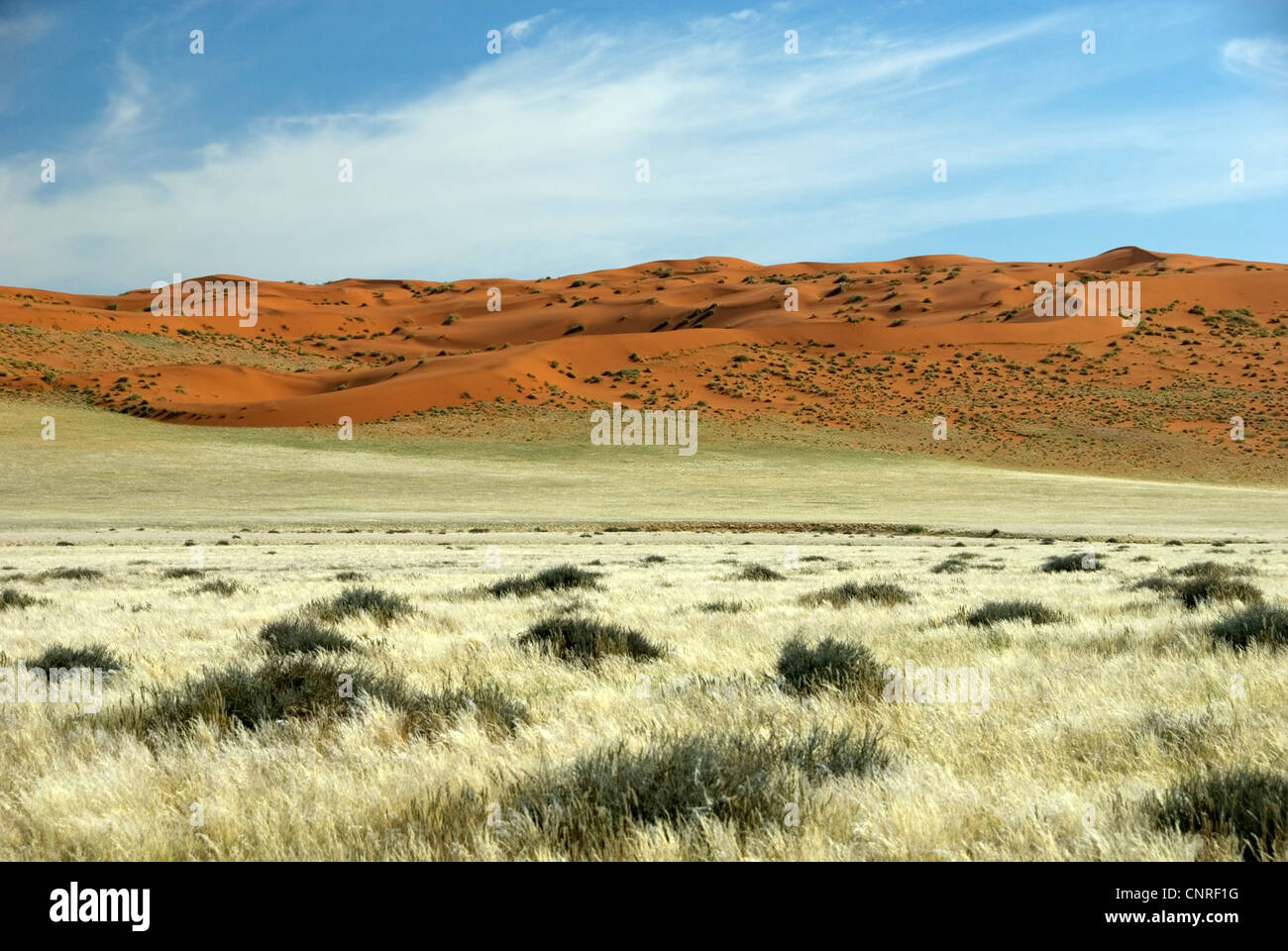 red dunes in the desert, Namibia, D707 Stock Photo