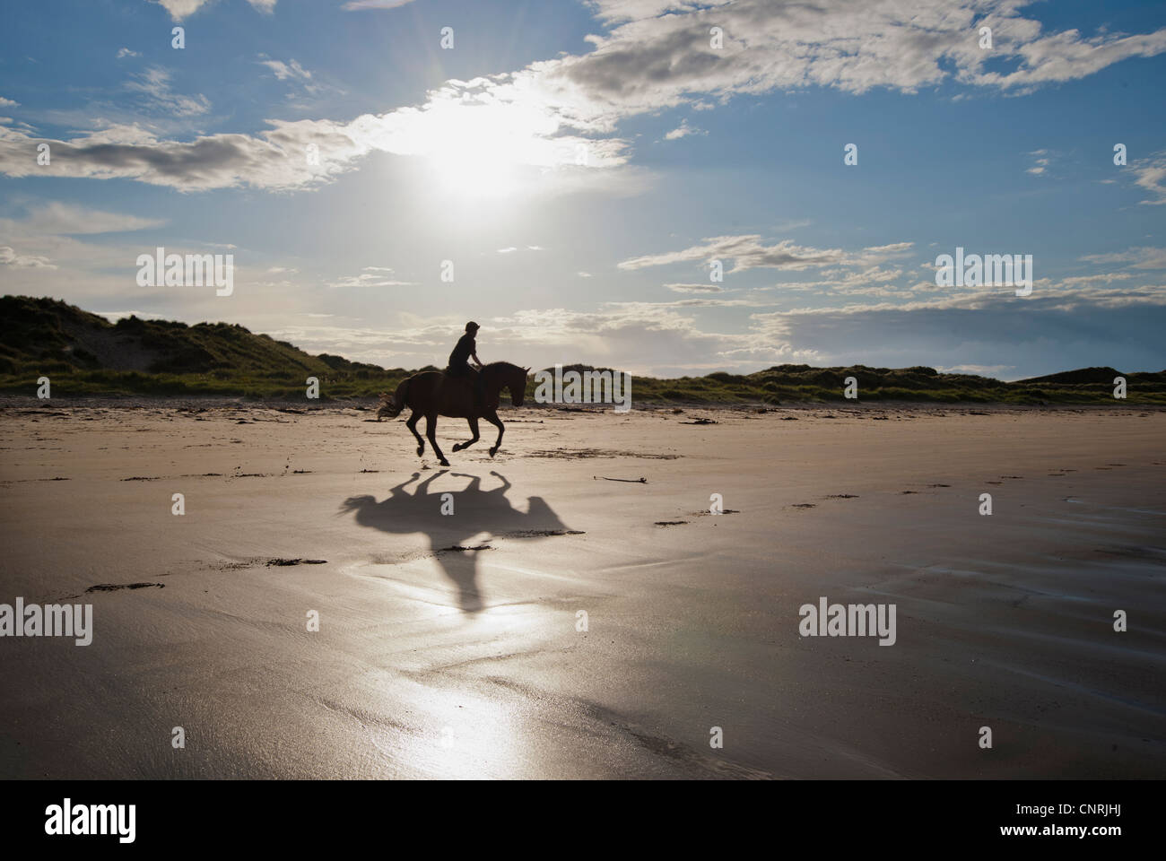 Horse and rider gallop along the beach near Seahouses Northumberland UK - Stock Image