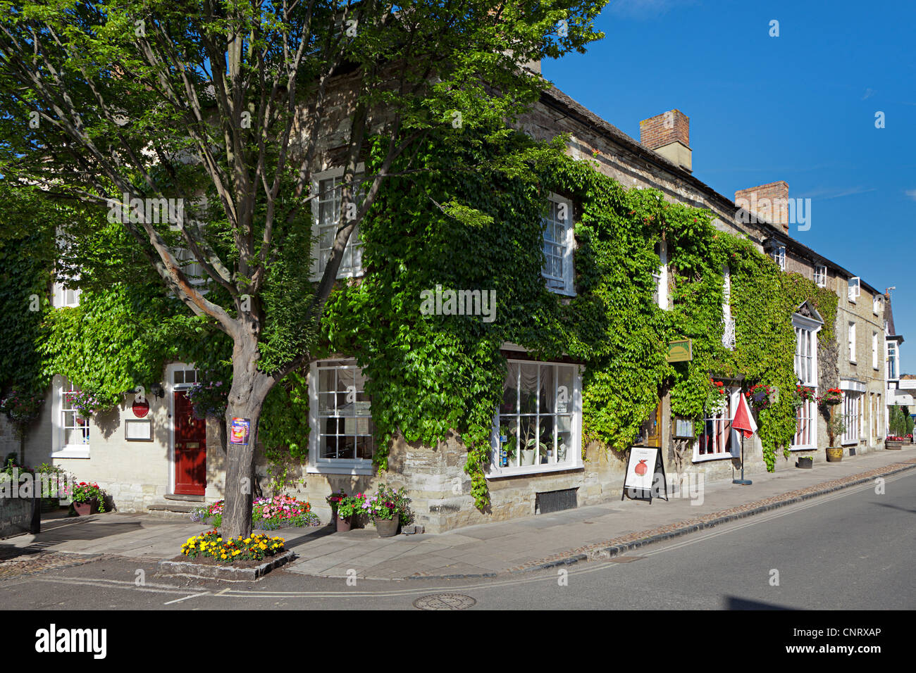 Shop and Brothertons tea rooms with Virginia Creeper, Woodstock, Oxfordshire, UK - Stock Image